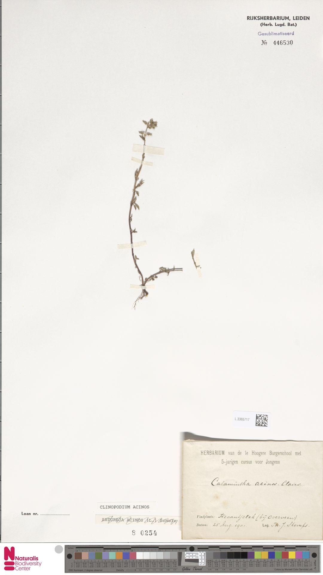 L.3365717 | Clinopodium acinos (L.) Kuntze