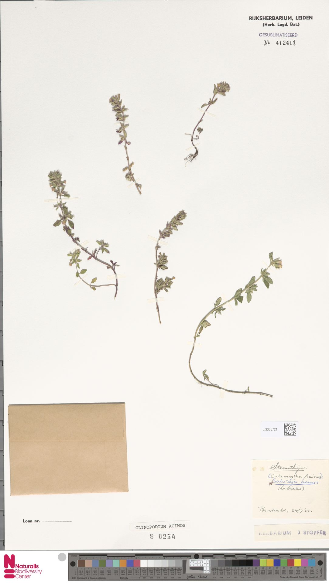 L.3365721 | Clinopodium acinos (L.) Kuntze