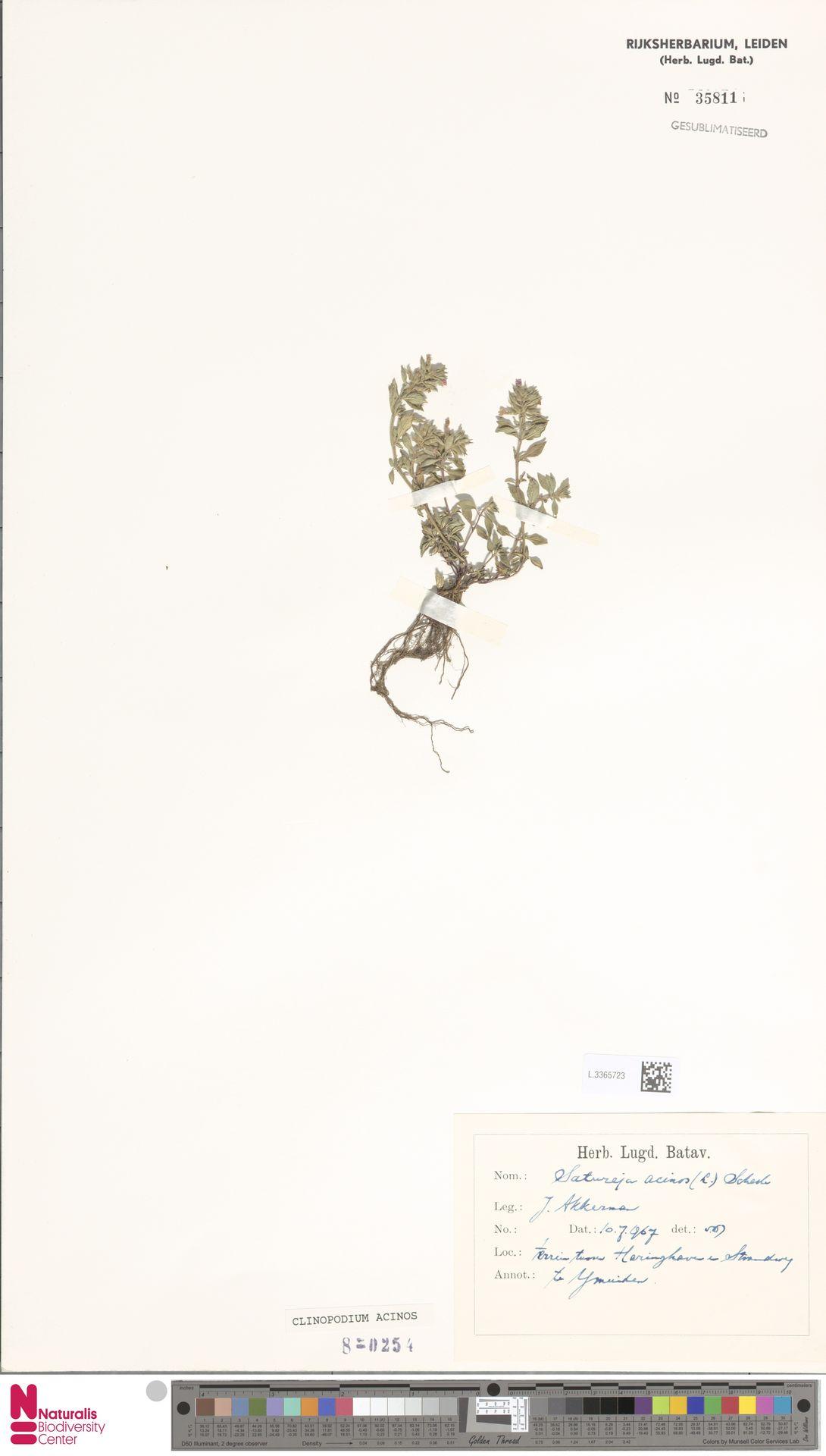 L.3365723   Clinopodium acinos (L.) Kuntze