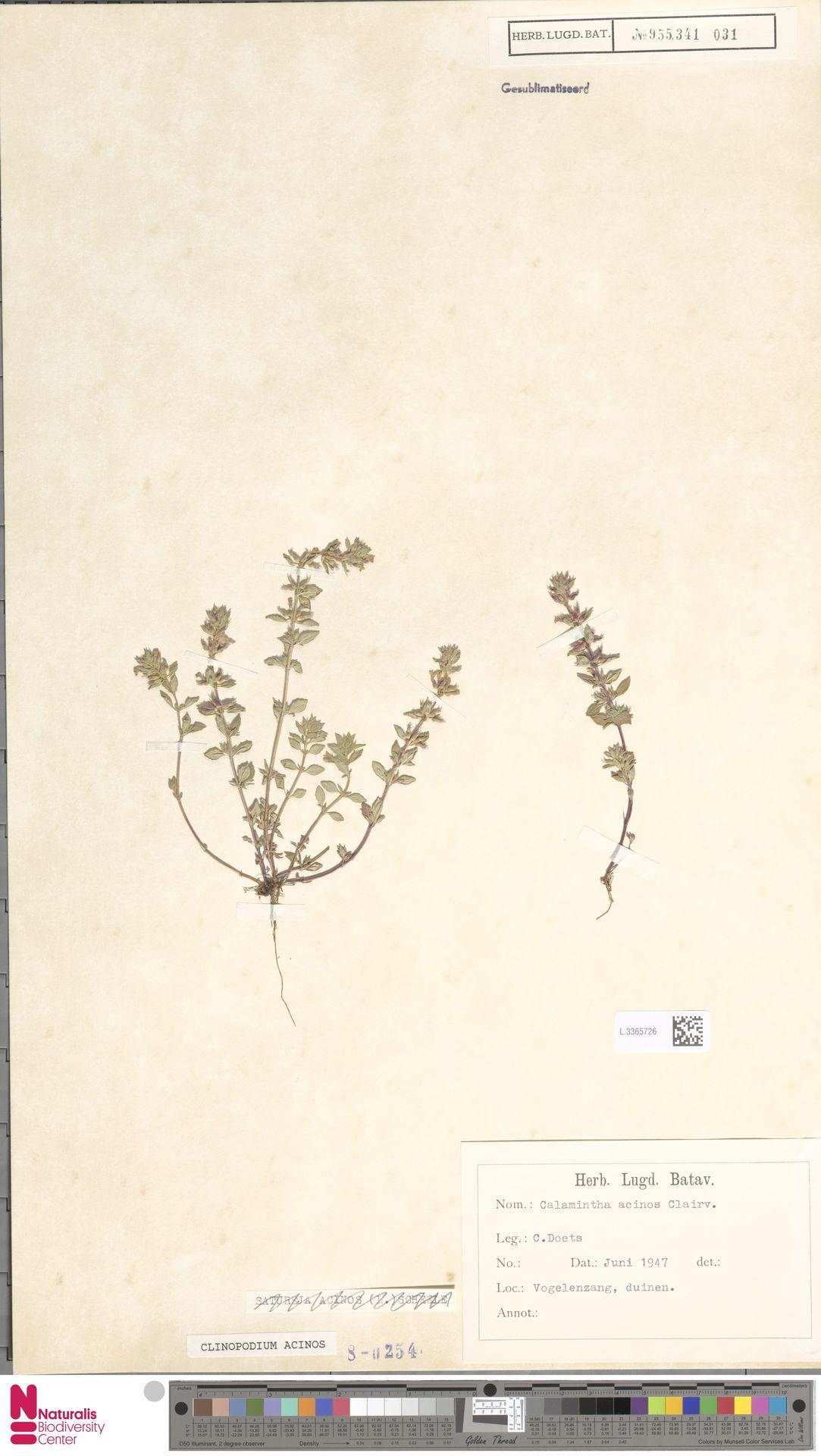 L.3365726   Clinopodium acinos (L.) Kuntze