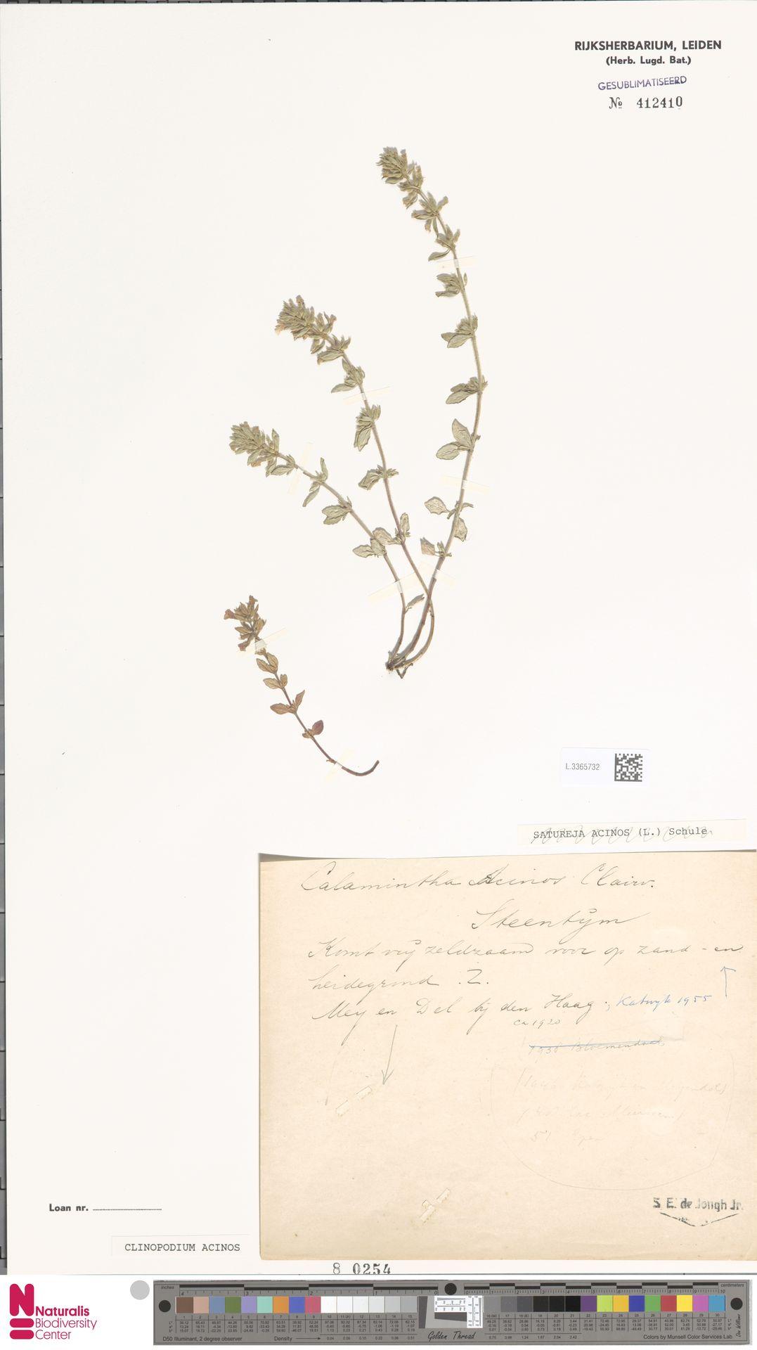 L.3365732 | Clinopodium acinos (L.) Kuntze
