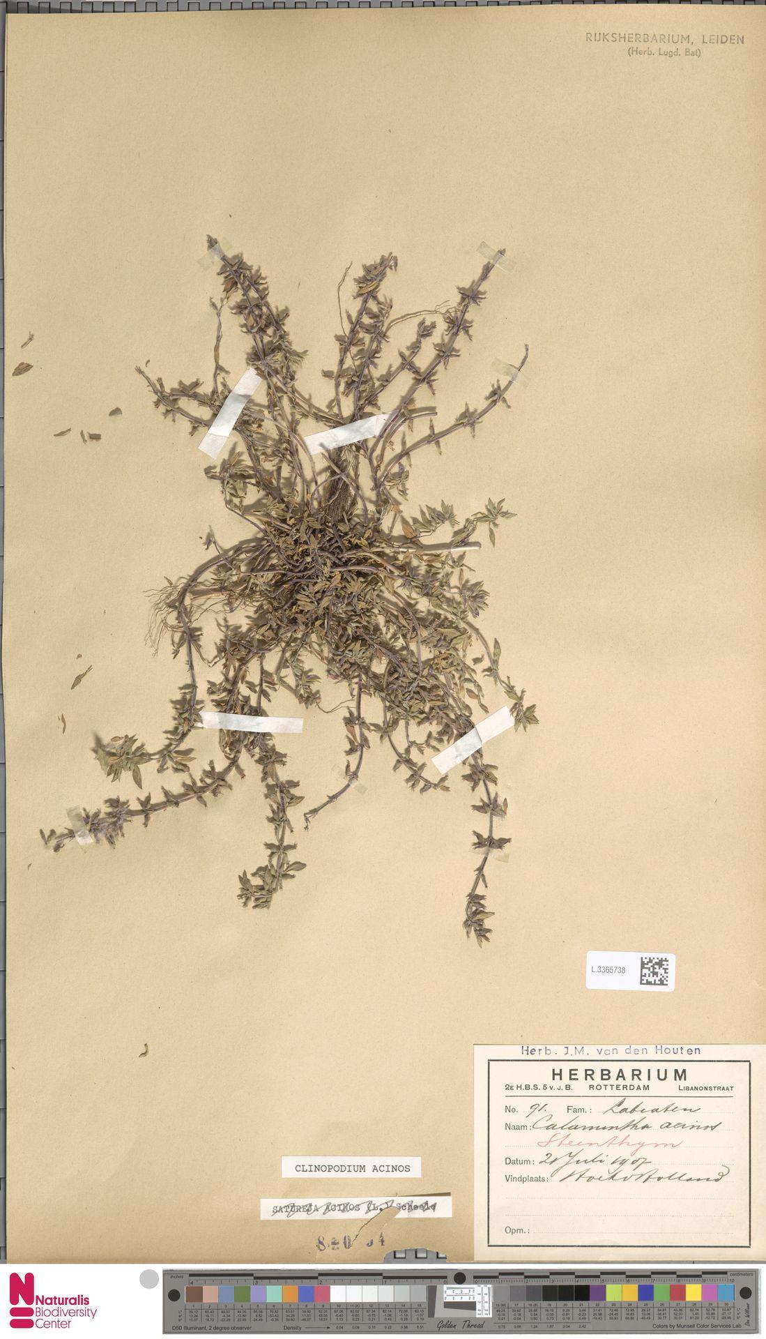 L.3365738   Clinopodium acinos (L.) Kuntze