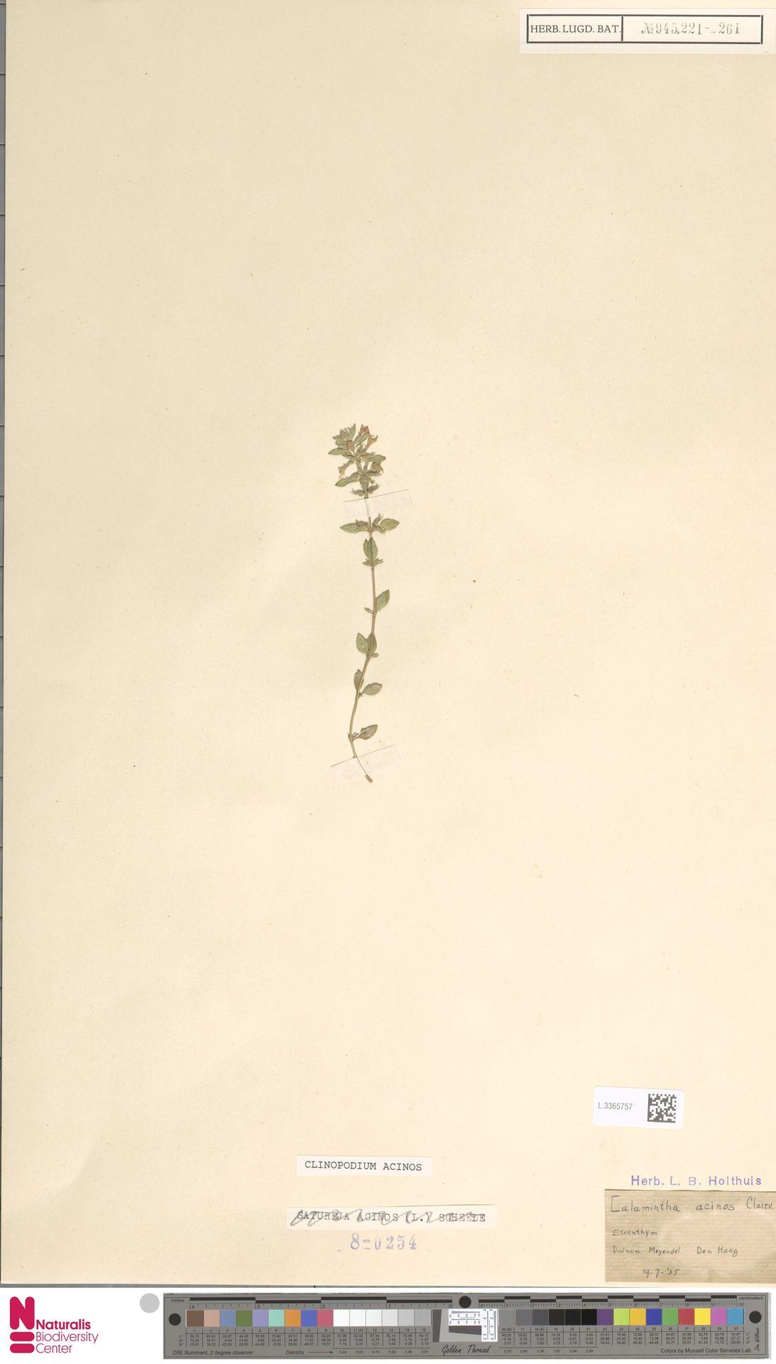L.3365757 | Clinopodium acinos (L.) Kuntze