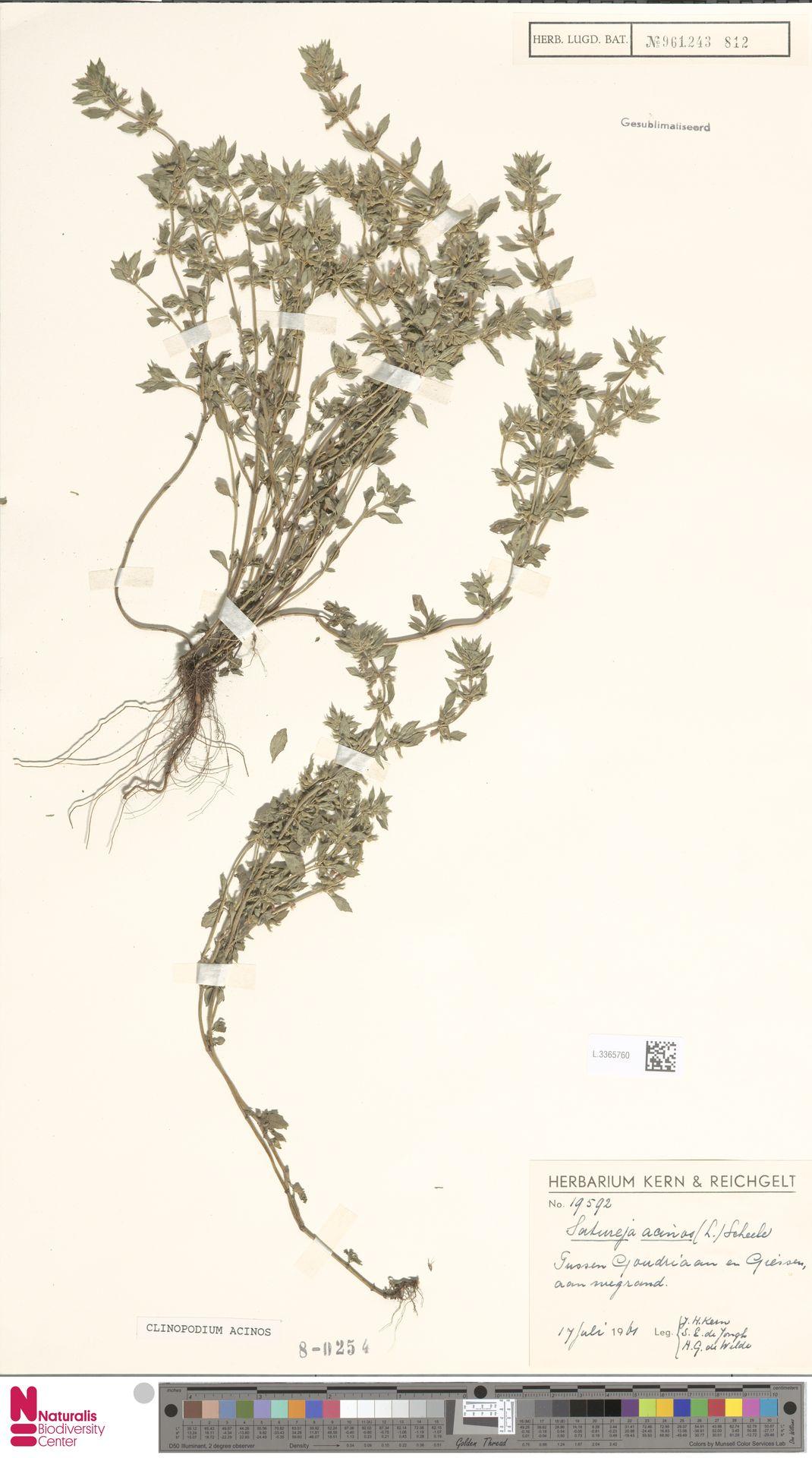 L.3365760 | Clinopodium acinos (L.) Kuntze