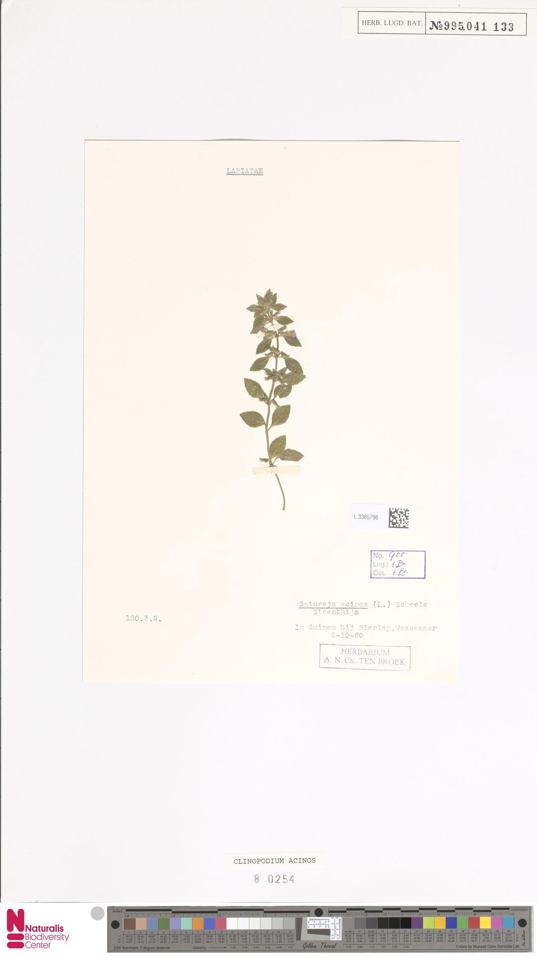 L.3365796 | Clinopodium acinos (L.) Kuntze