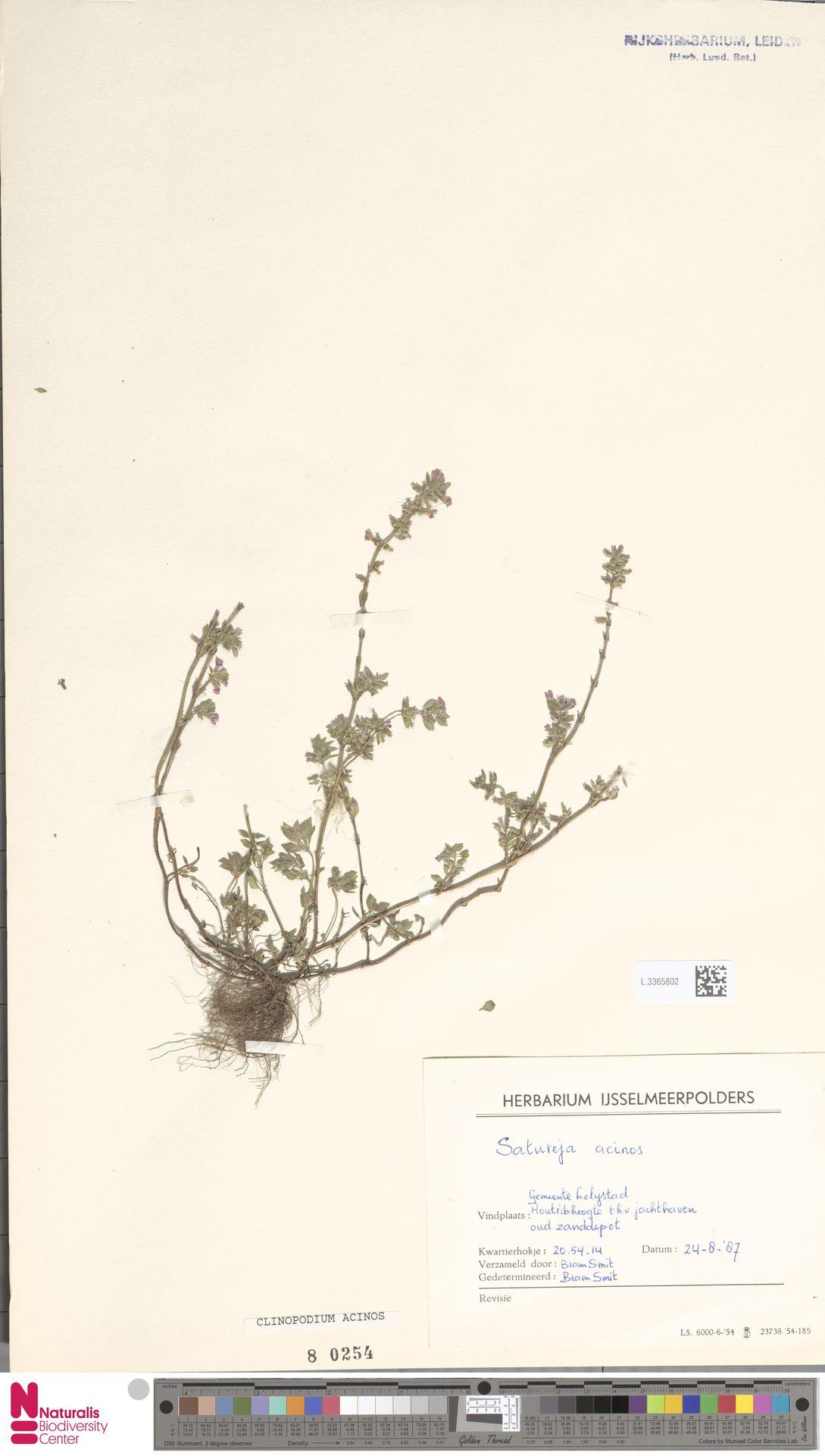 L.3365802 | Clinopodium acinos (L.) Kuntze