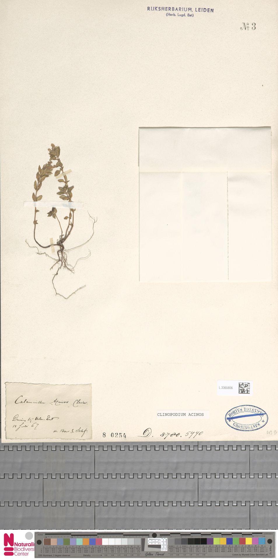 L.3365806 | Clinopodium acinos (L.) Kuntze
