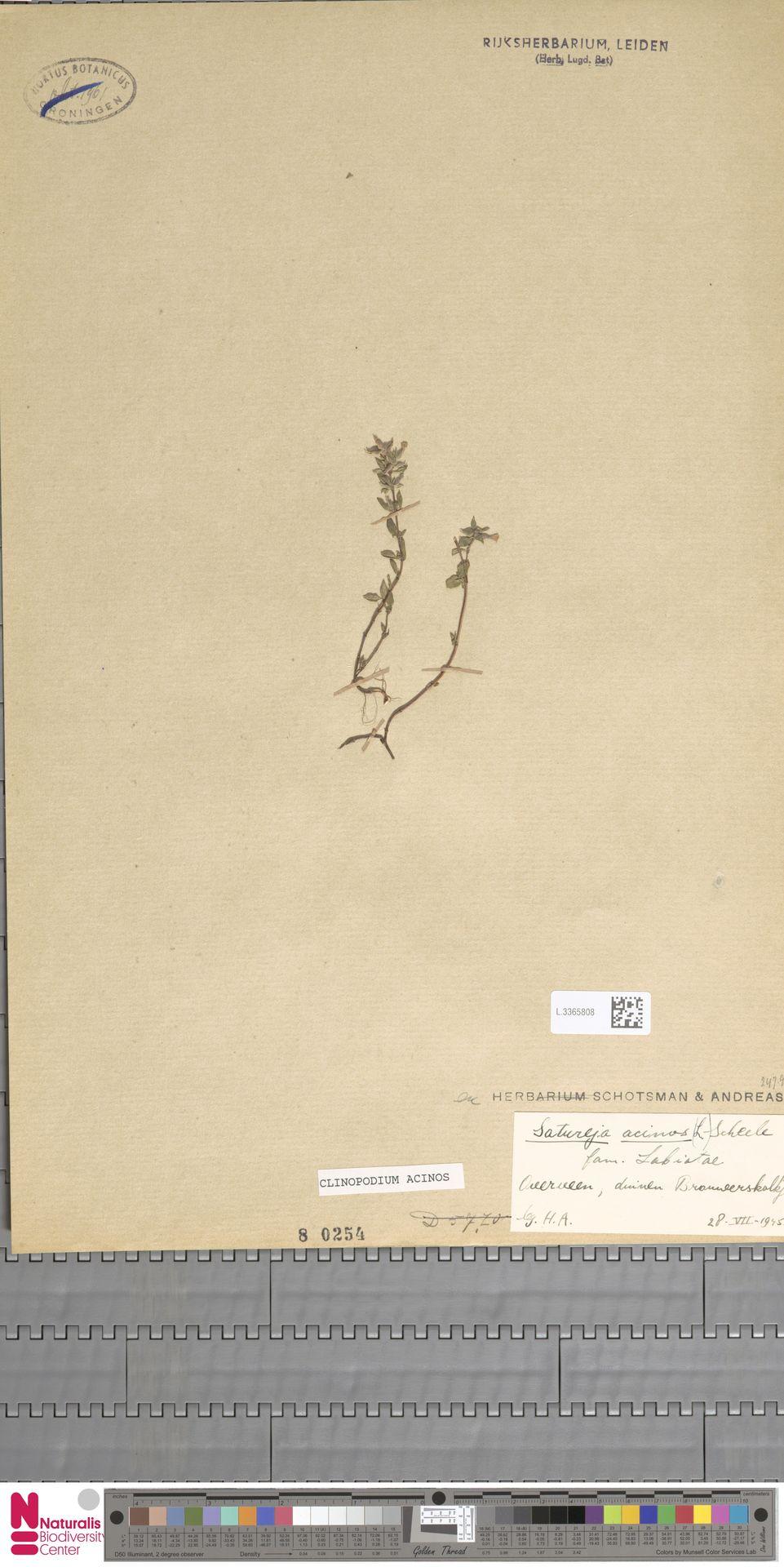 L.3365808   Clinopodium acinos (L.) Kuntze