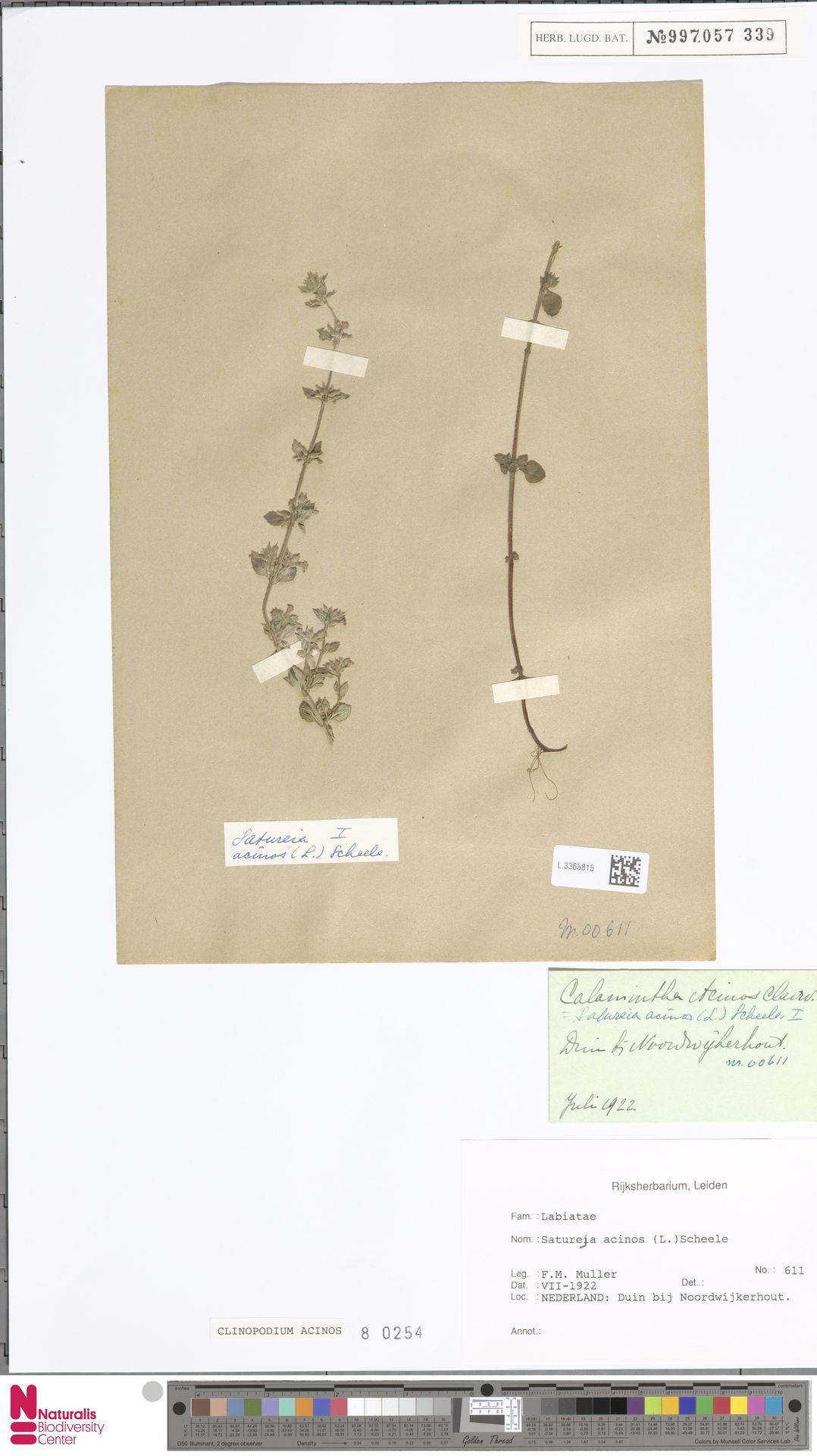 L.3365815   Clinopodium acinos (L.) Kuntze