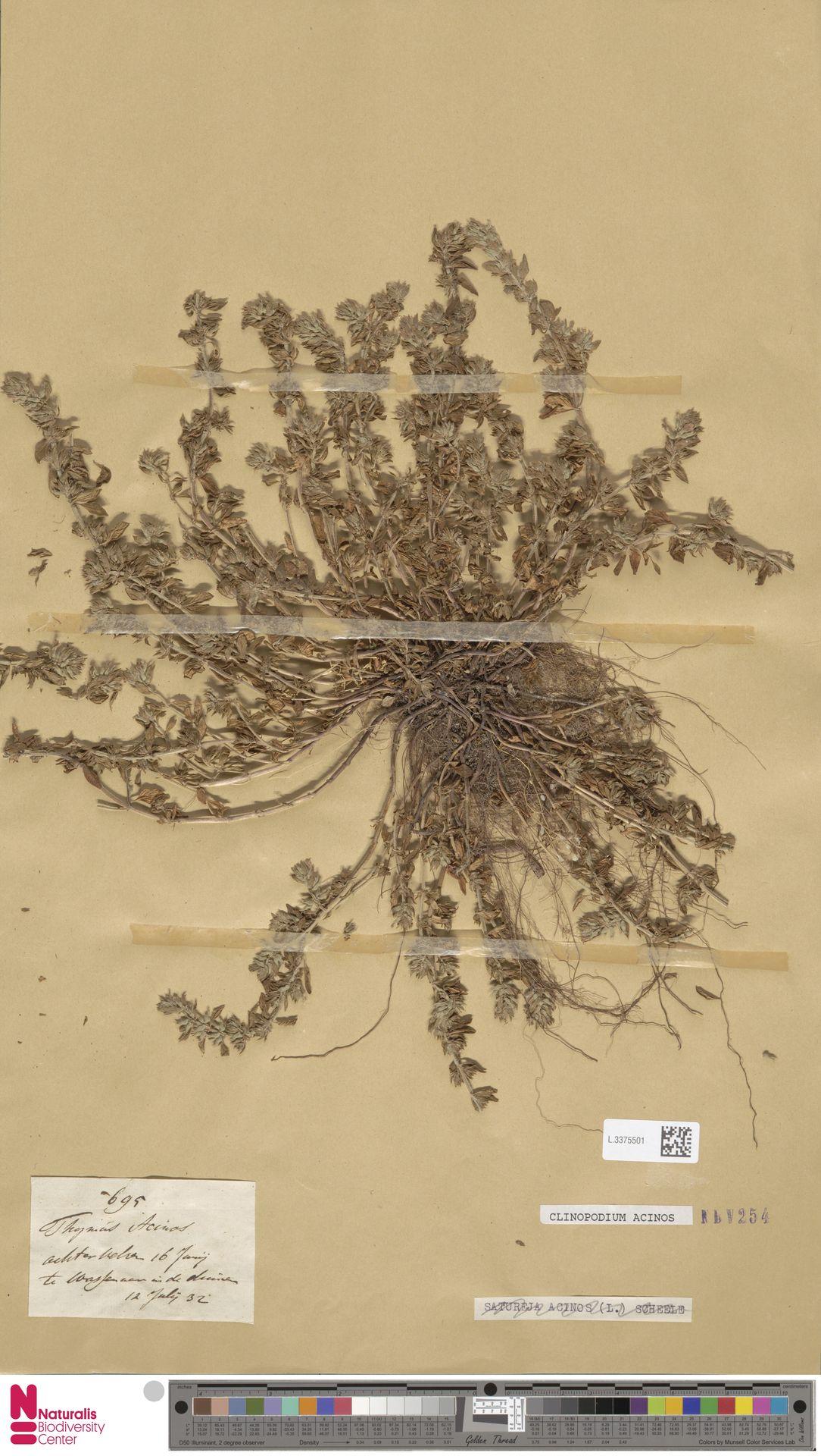 L.3375501 | Clinopodium acinos (L.) Kuntze