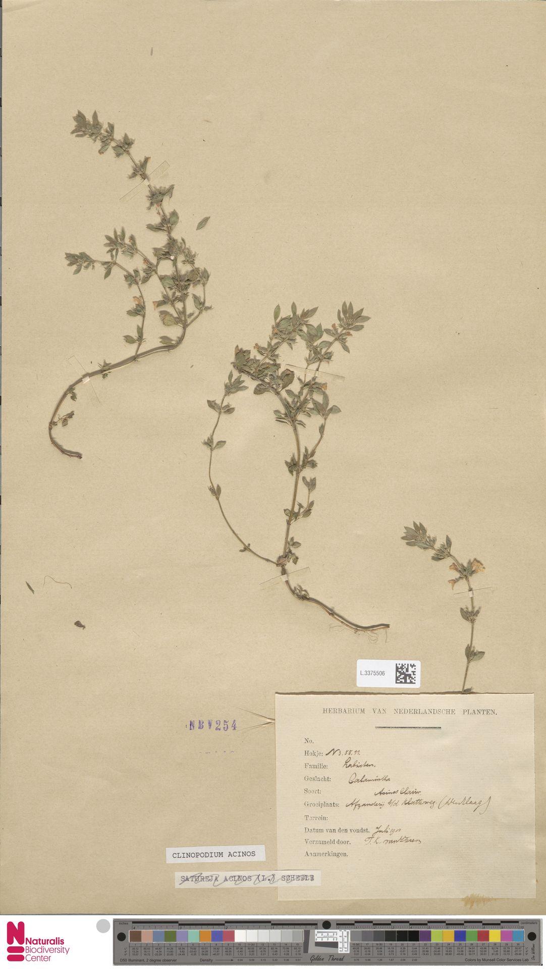 L.3375506   Clinopodium acinos (L.) Kuntze