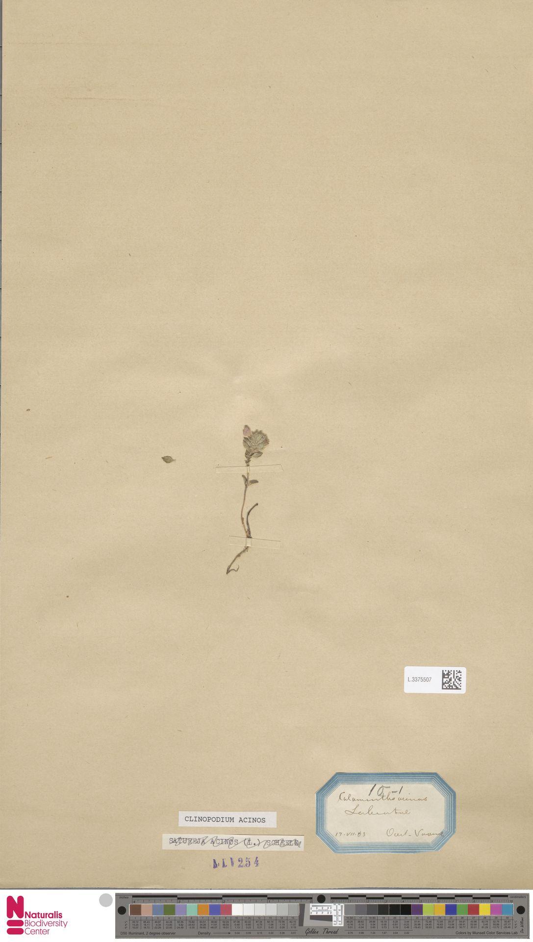 L.3375507 | Clinopodium acinos (L.) Kuntze