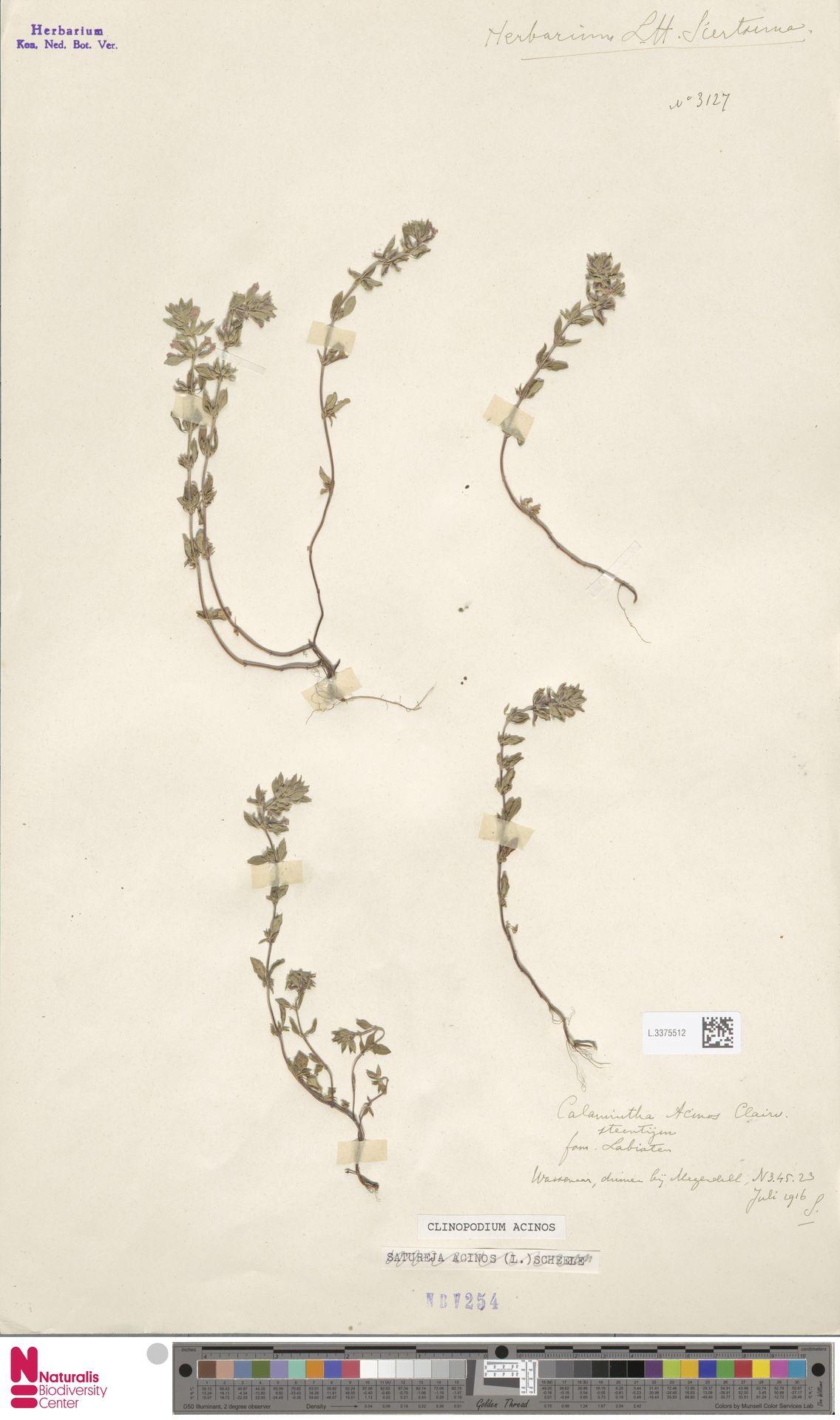 L.3375512 | Clinopodium acinos (L.) Kuntze