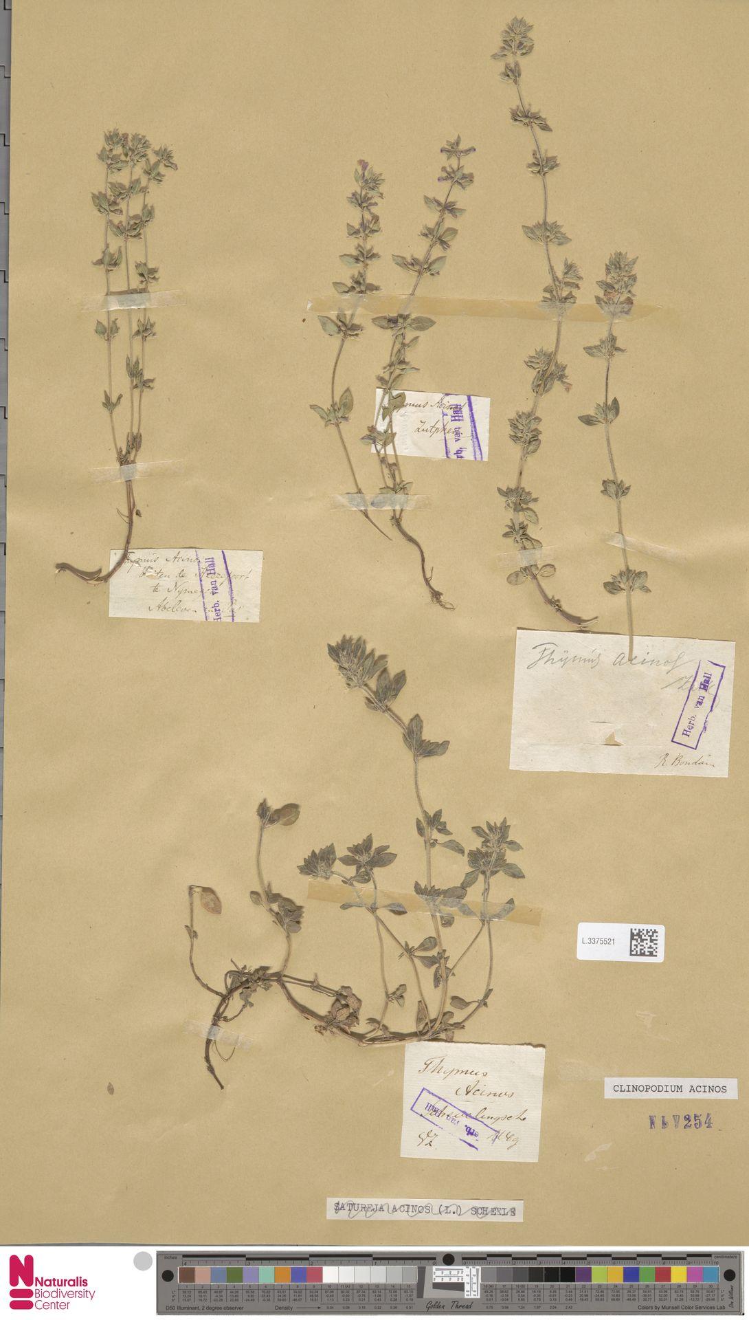 L.3375521   Clinopodium acinos (L.) Kuntze