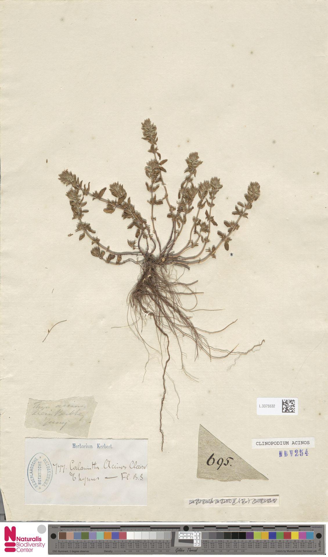 L.3375532   Clinopodium acinos (L.) Kuntze