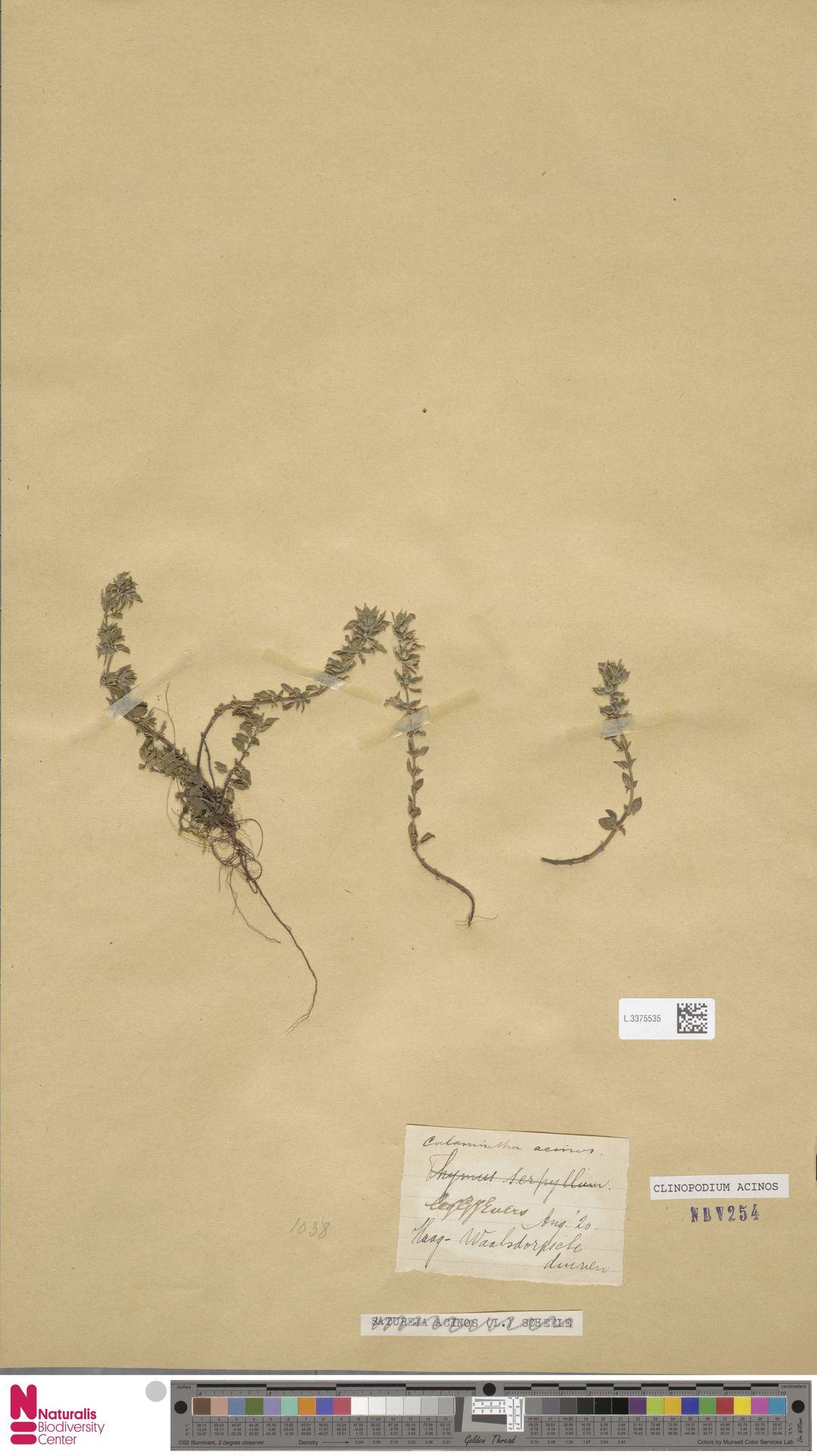 L.3375535 | Clinopodium acinos (L.) Kuntze
