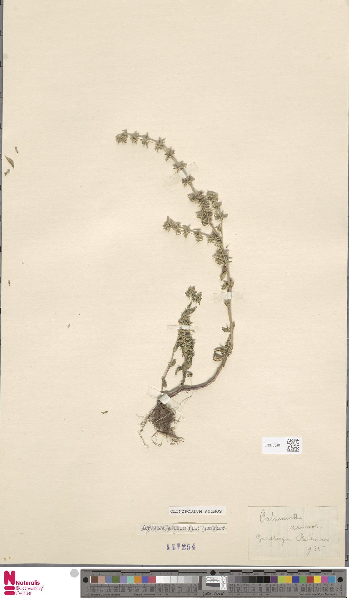 L.3375540 | Clinopodium acinos (L.) Kuntze