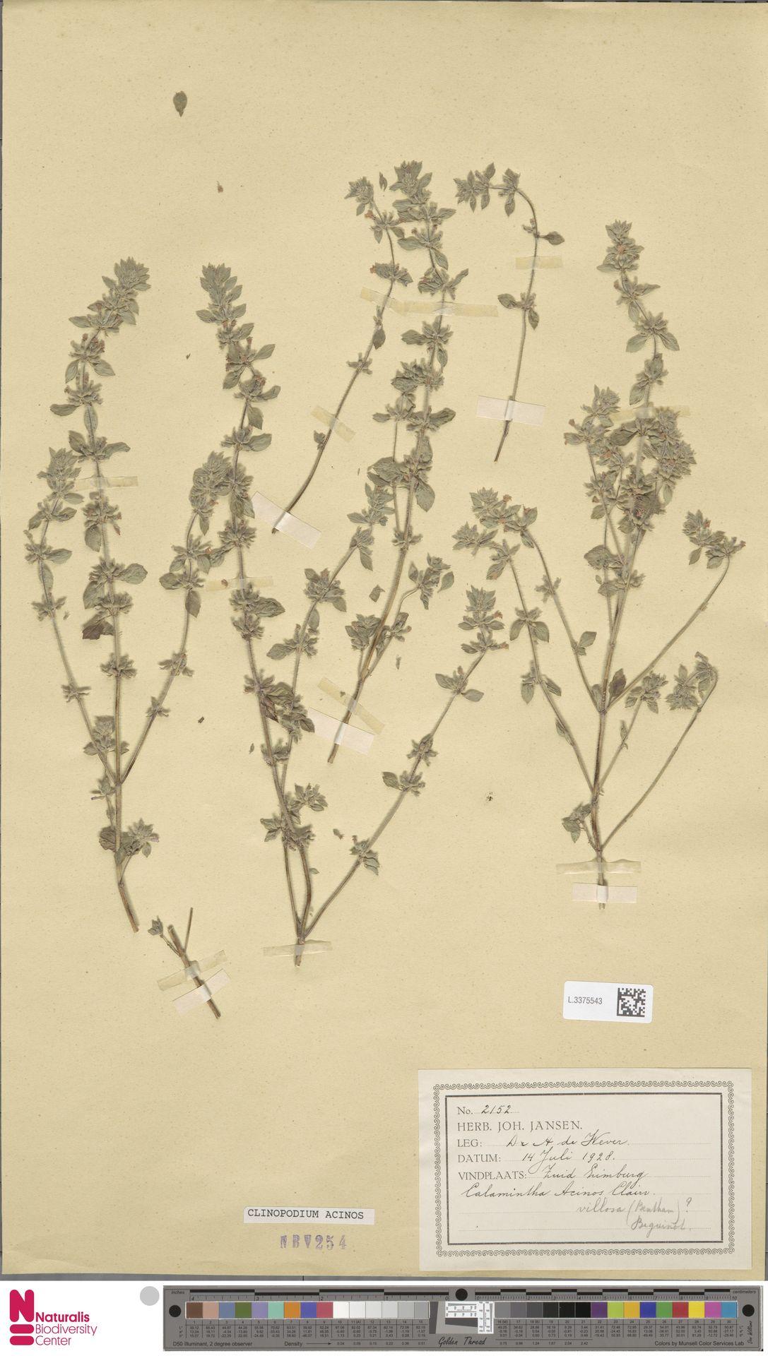 L.3375543 | Clinopodium acinos (L.) Kuntze