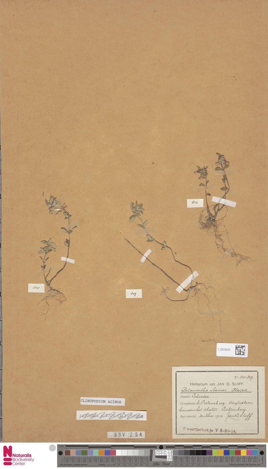 L.3375544 | Clinopodium acinos (L.) Kuntze