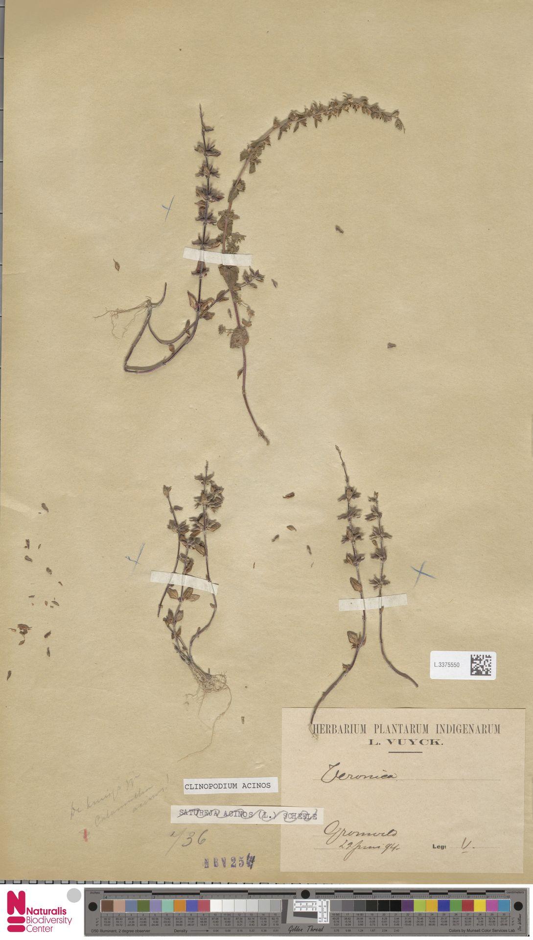 L.3375550   Clinopodium acinos (L.) Kuntze