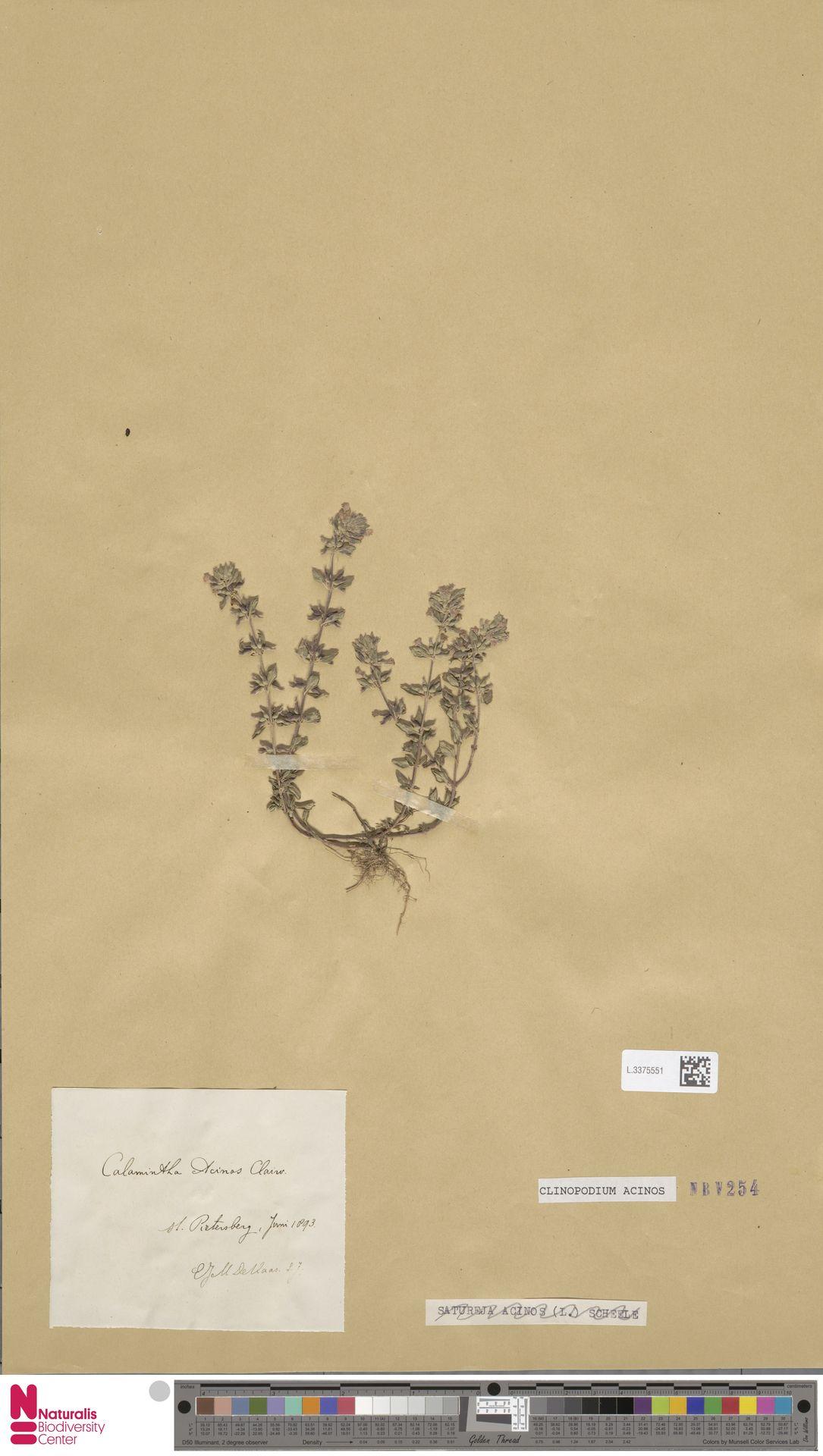 L.3375551 | Clinopodium acinos (L.) Kuntze