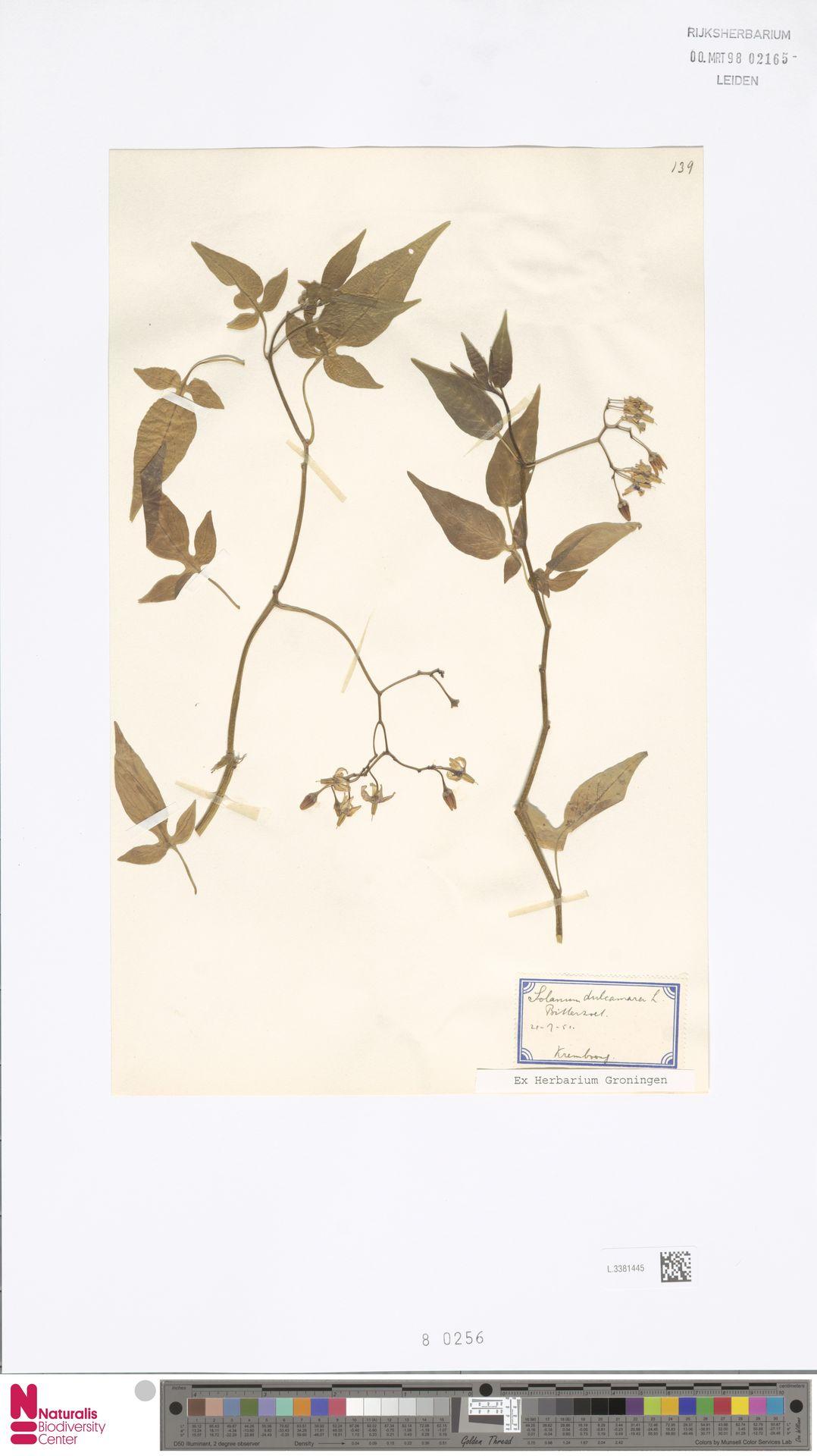 L.3381445 | Solanum dulcamara L.