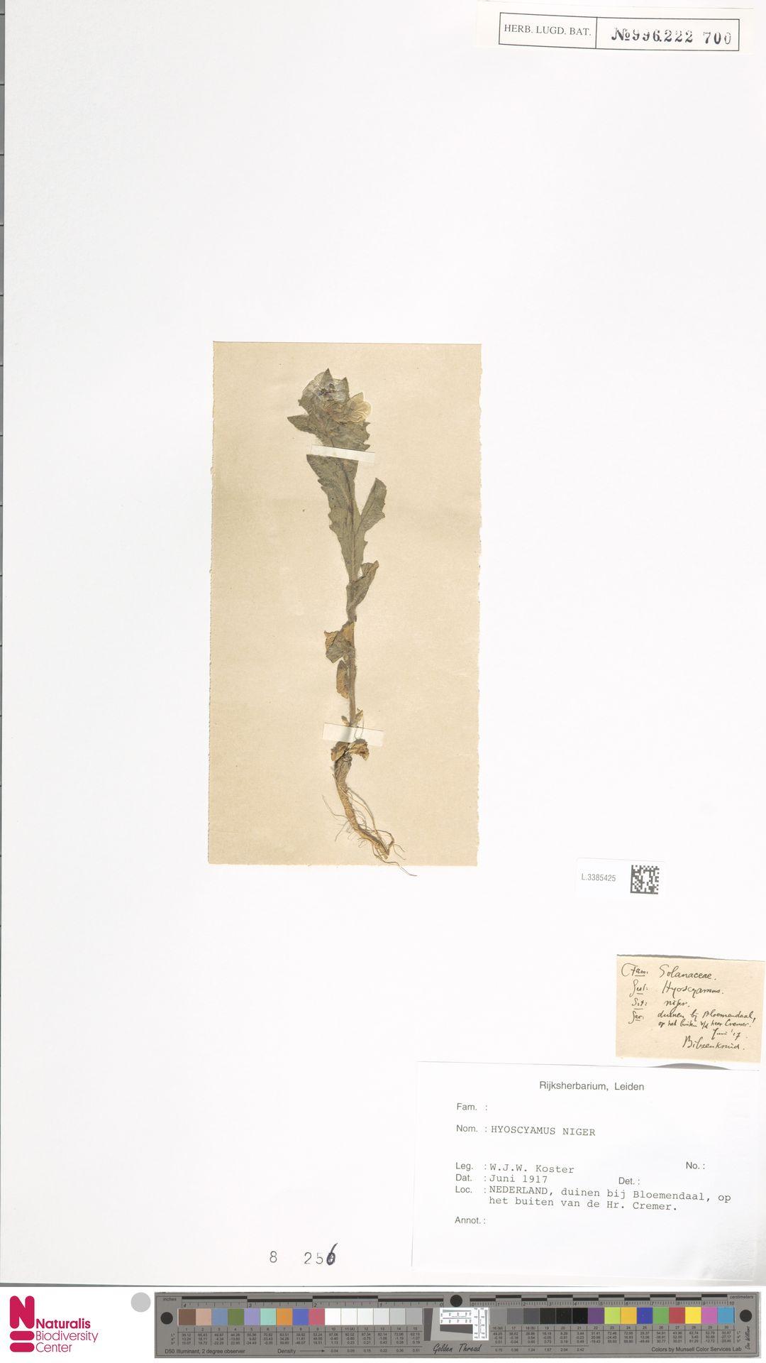L.3385425 | Hyoscyamus niger L.