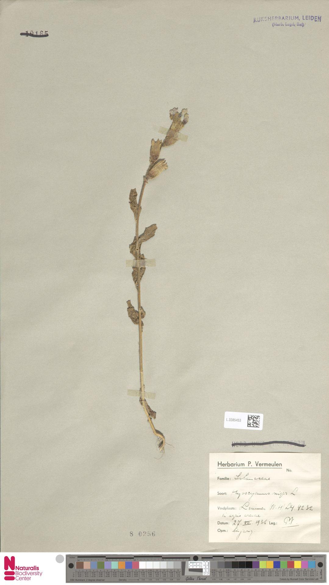 L.3385453 | Hyoscyamus niger L.