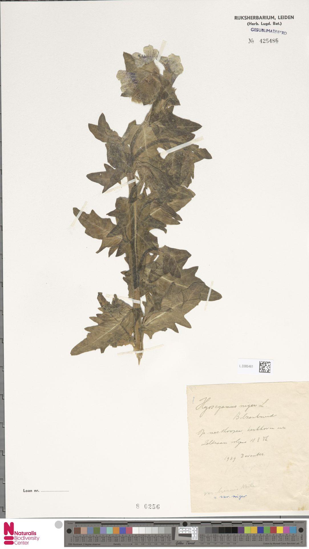 L.3385461 | Hyoscyamus niger L.
