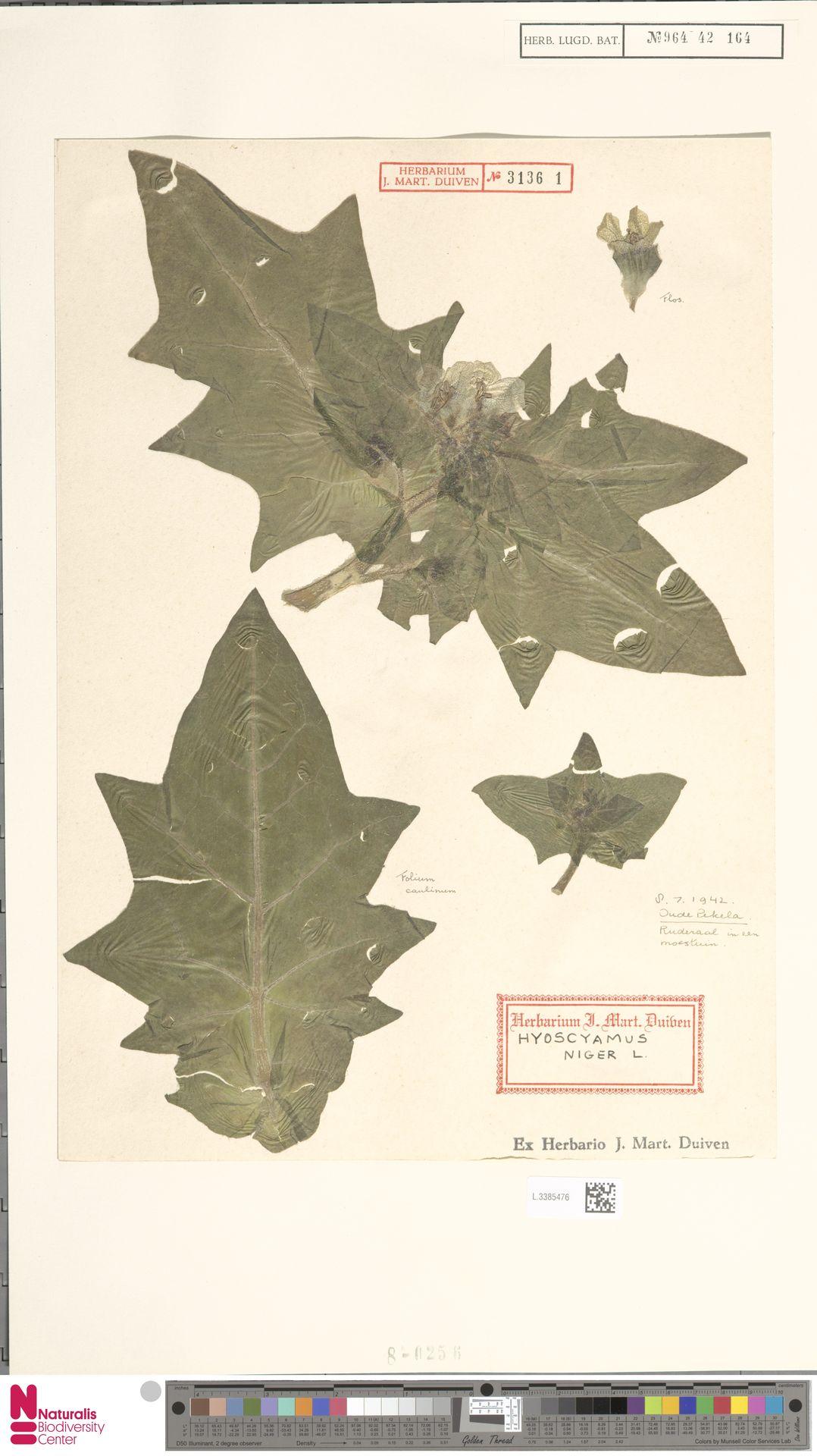 L.3385476   Hyoscyamus niger L.