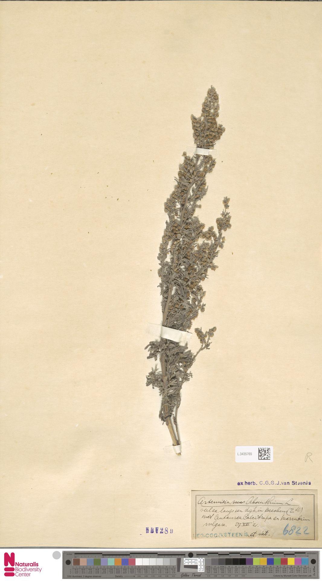 L.3435765 | Artemisia absinthium L.