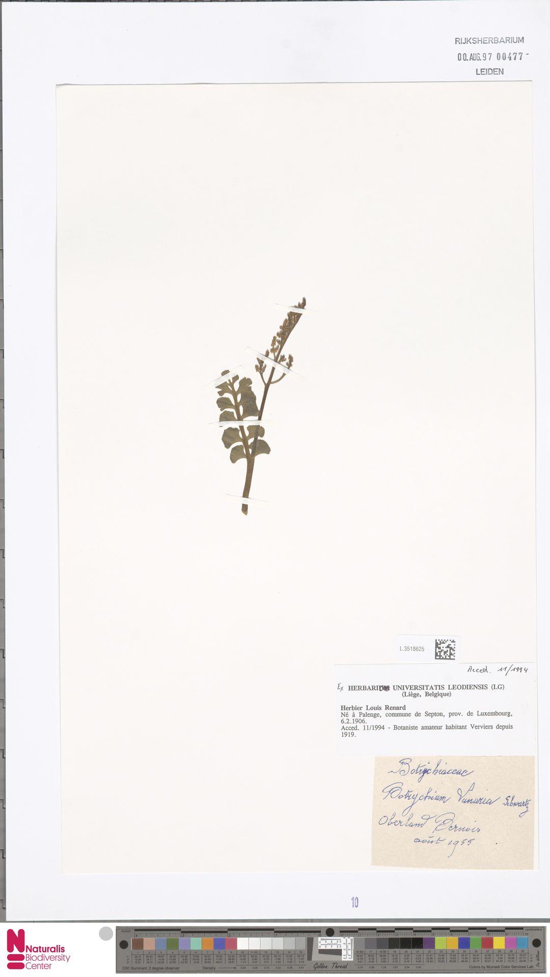 L.3518625 | Botrychium lunaria (L.) Sw.