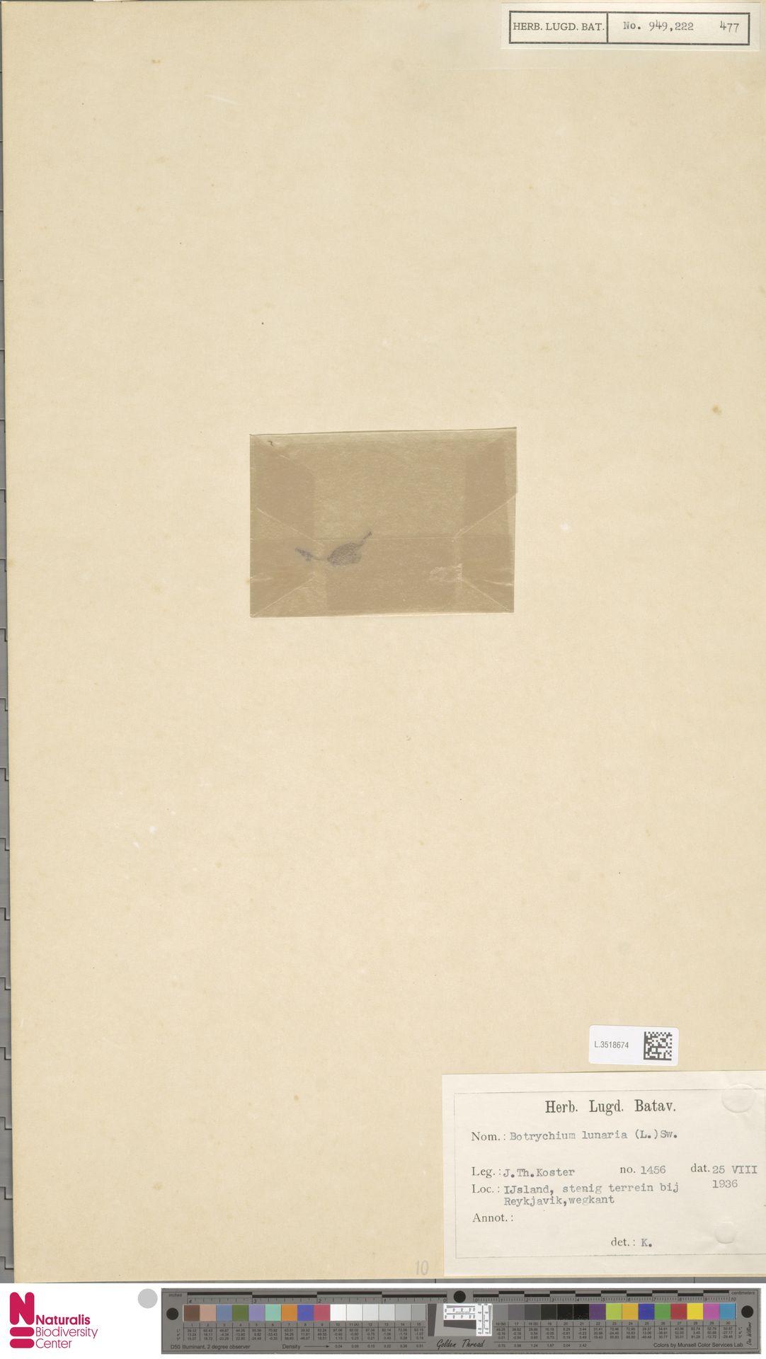 L.3518674   Botrychium lunaria (L.) Sw.