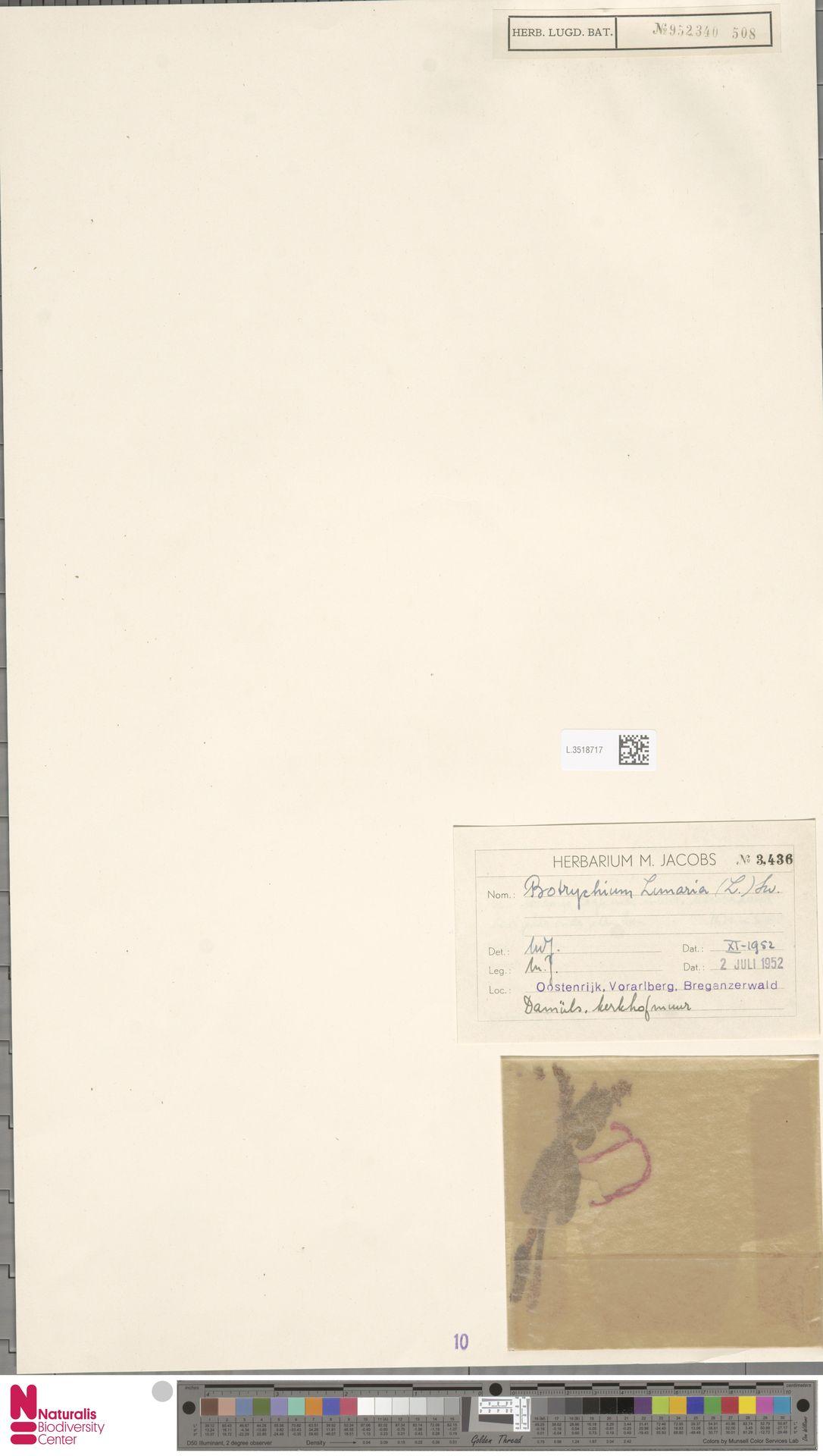 L.3518717   Botrychium lunaria (L.) Sw.