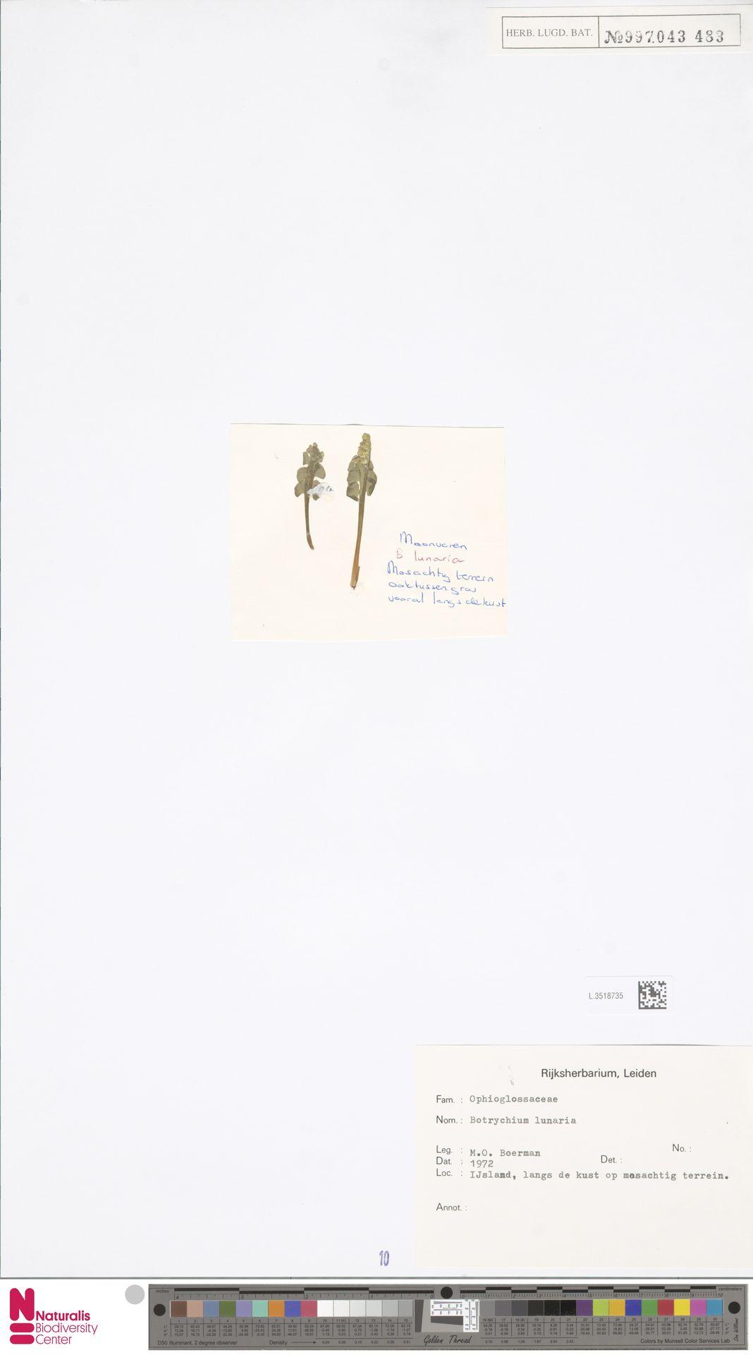 L.3518735 | Botrychium lunaria (L.) Sw.
