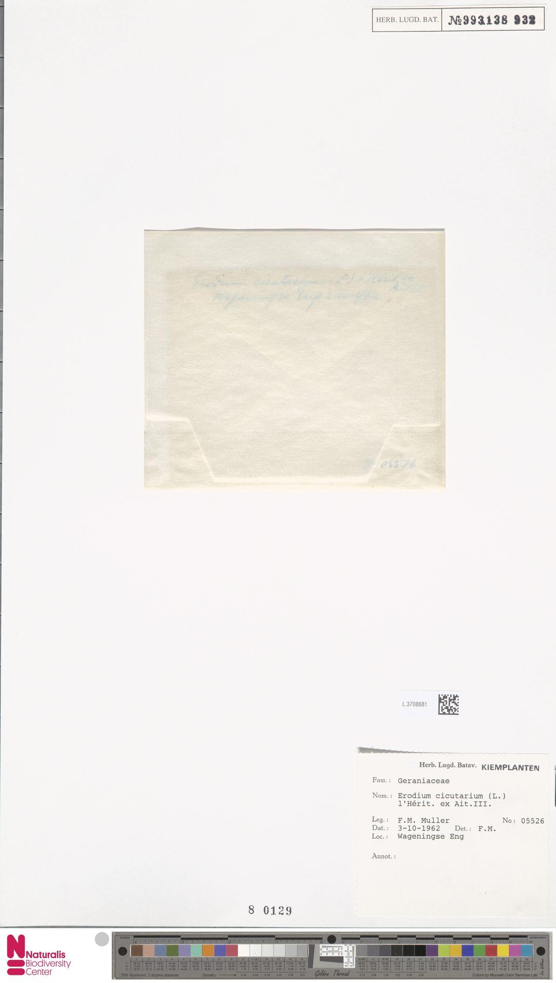 L.3708681 | Erodium cicutarium (L.) L'Hér.