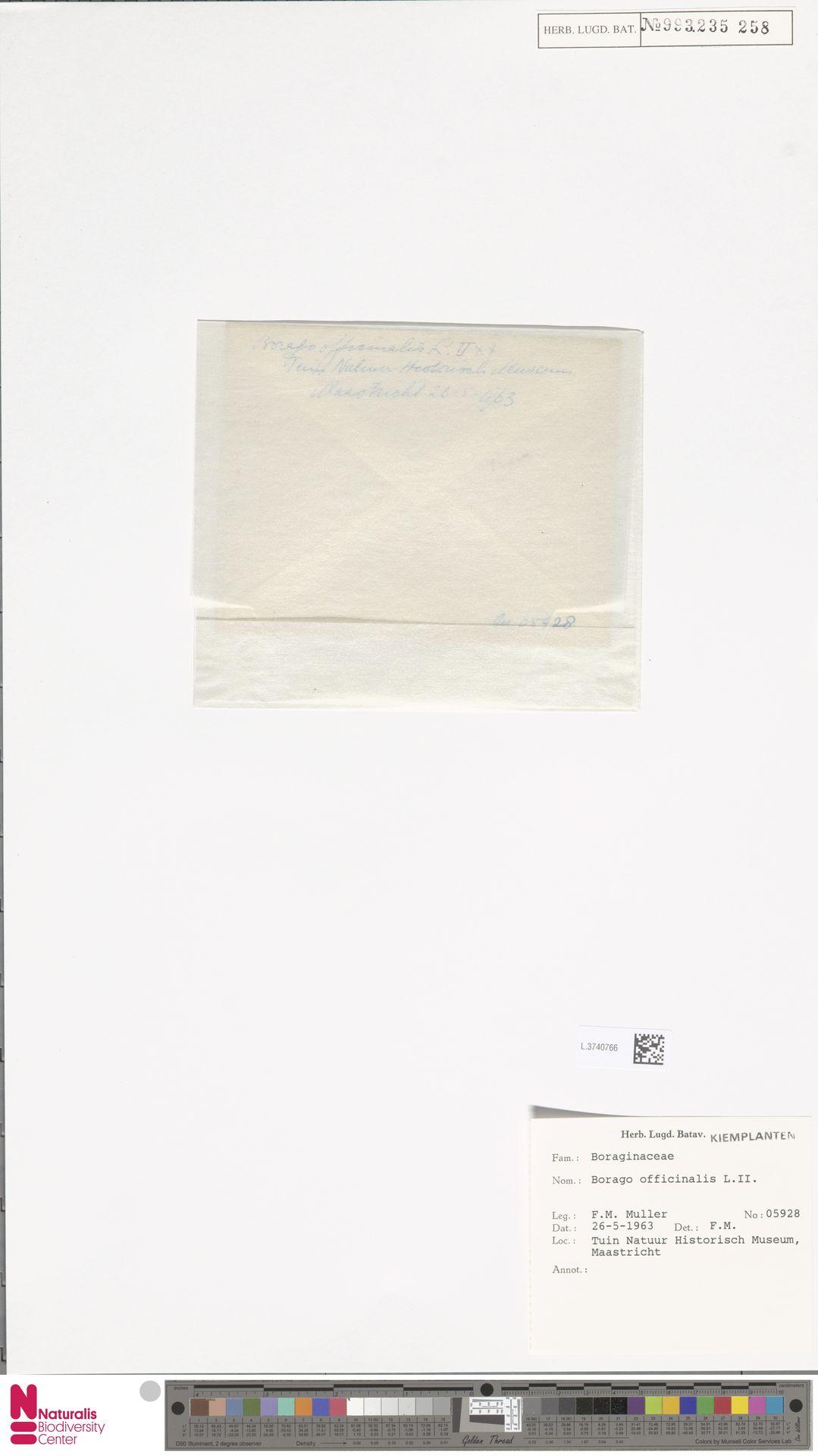 L.3740766 | Borago officinalis L.