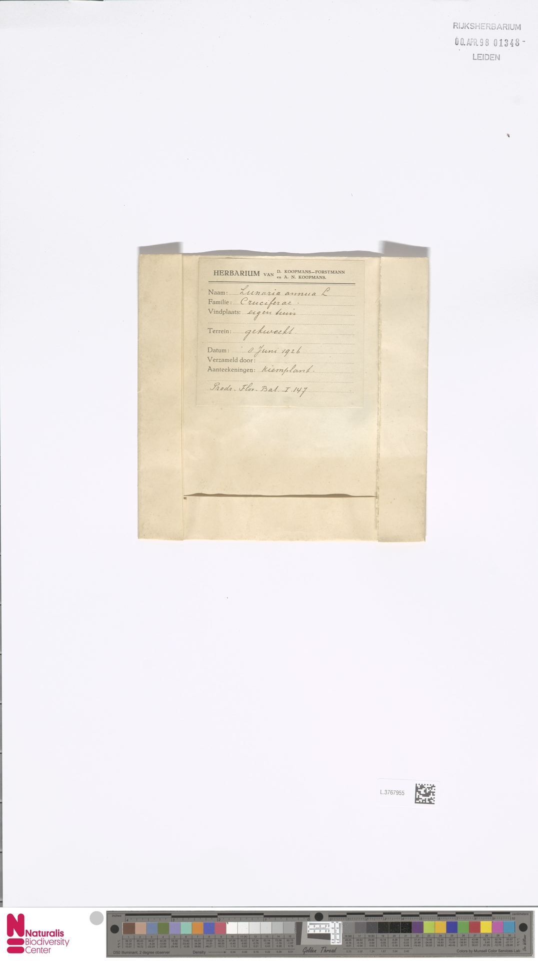 L.3767955 | Lunaria annua L.