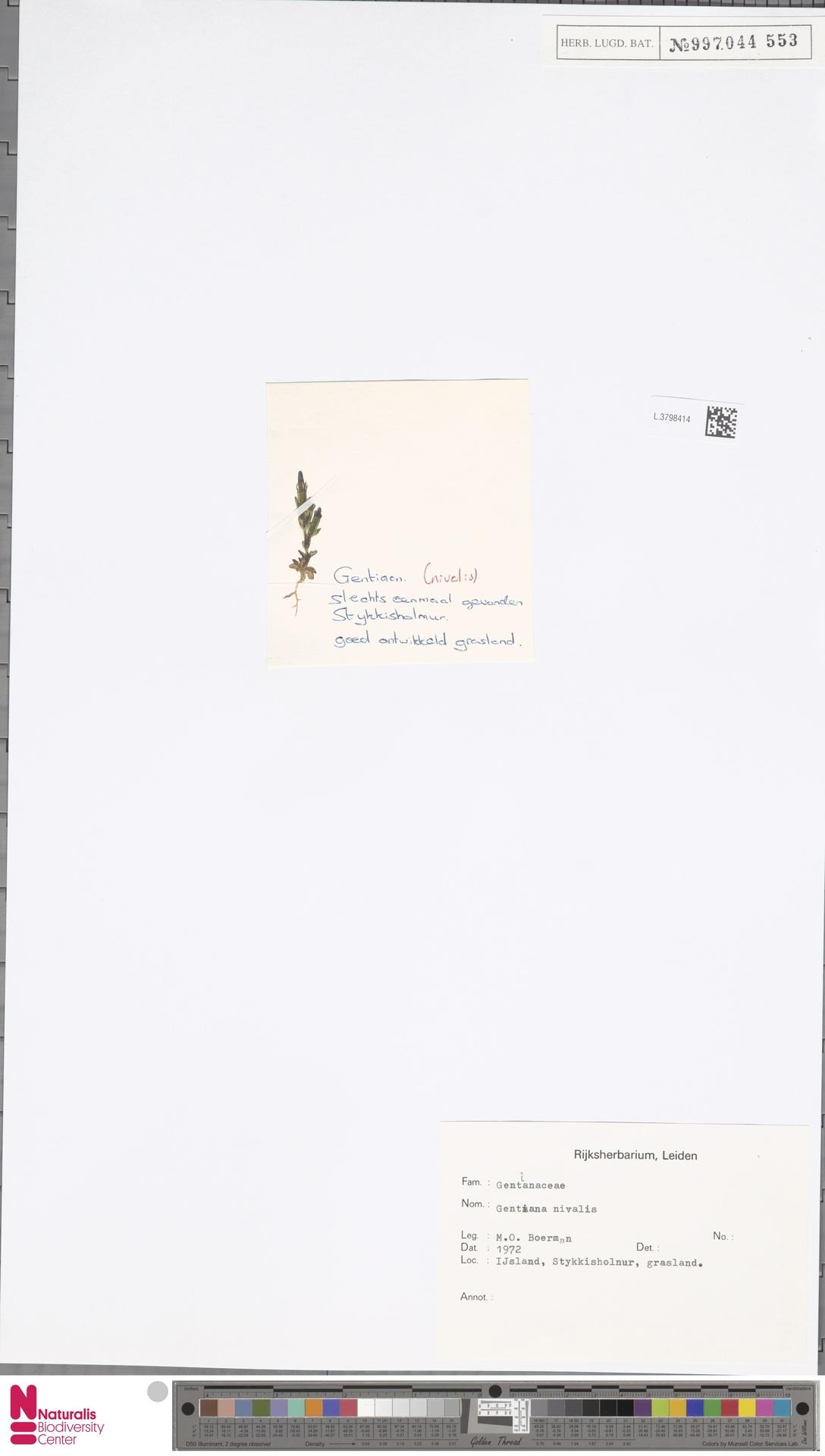L.3798414 | Gentiana nivalis L.