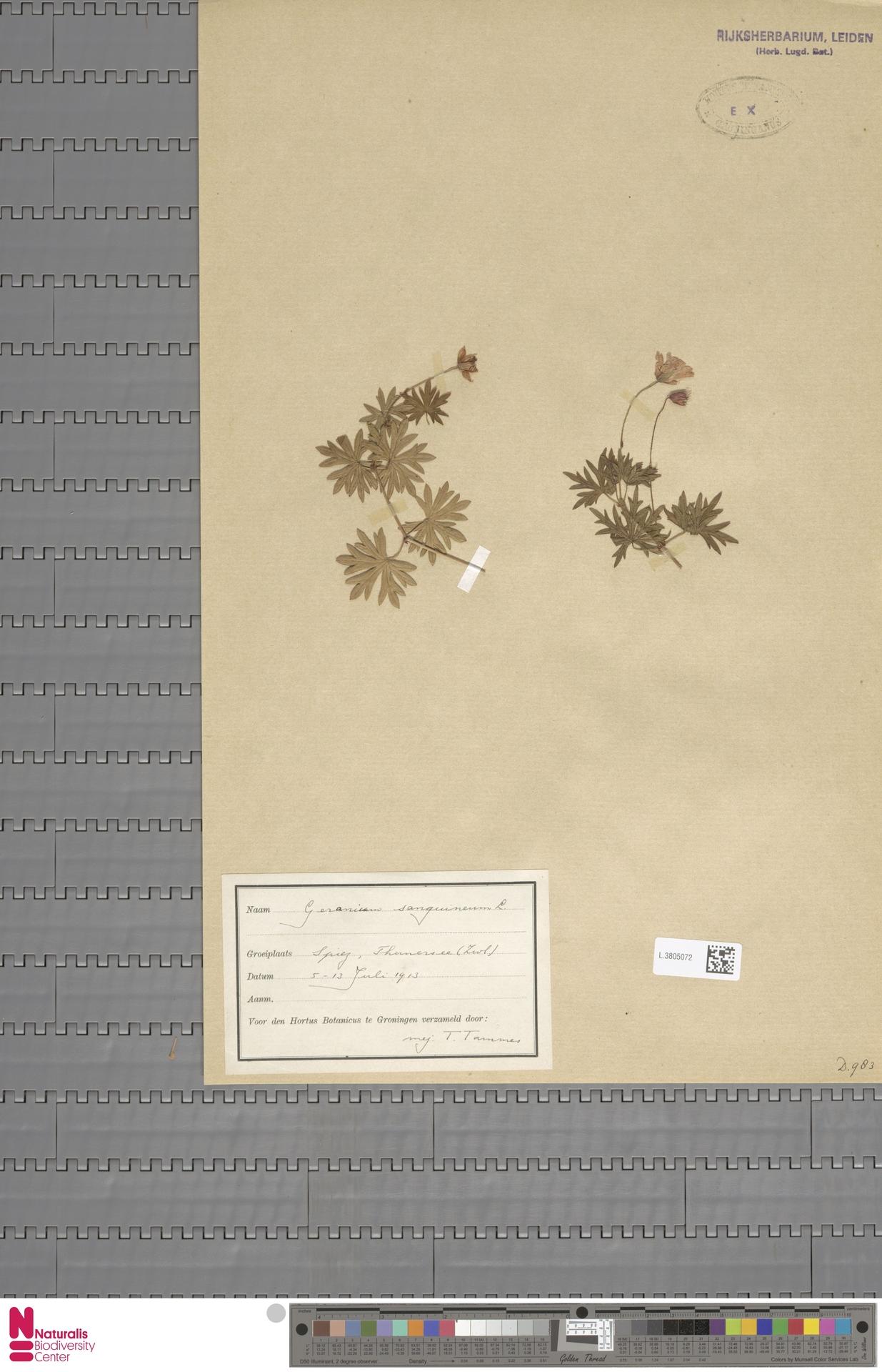 L.3805072 | Geranium sanguineum L.