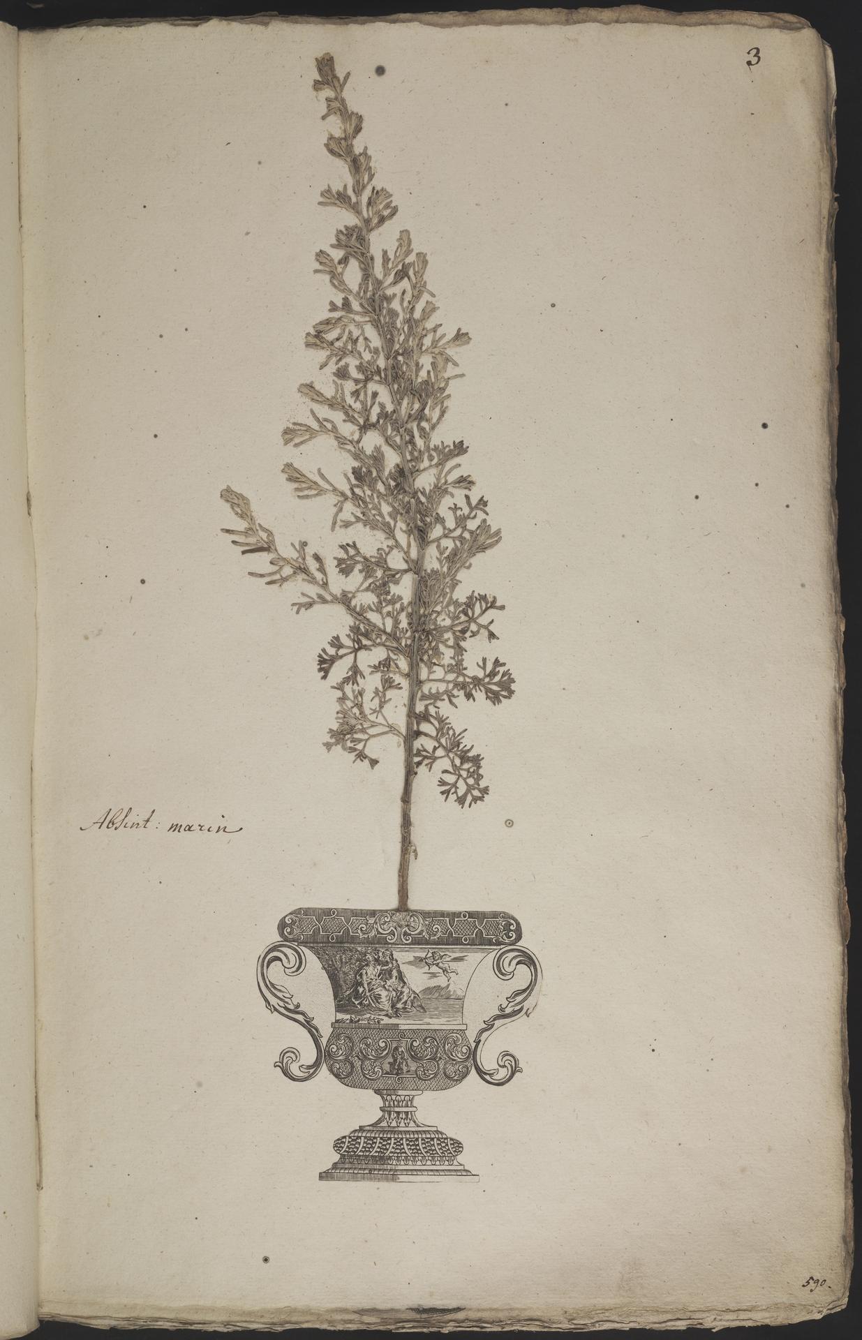 L.3960847 | Artemisia maritima L.