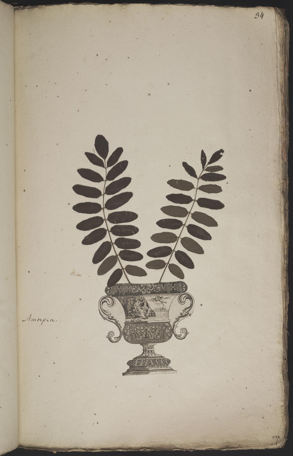 L.3960889 | Amorpha