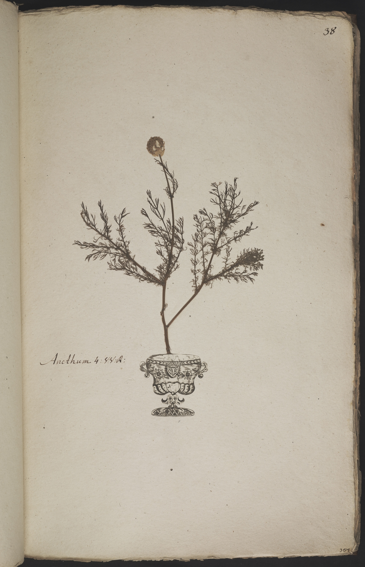 L.3960896 | Matricaria discoidea DC.