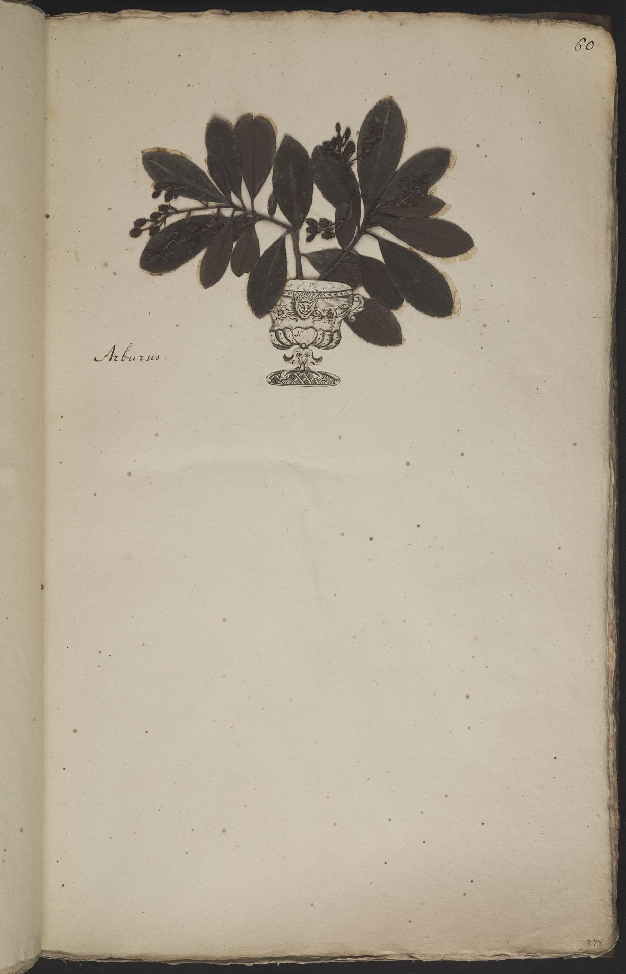 L.3960924 | Arbutus unedo L.