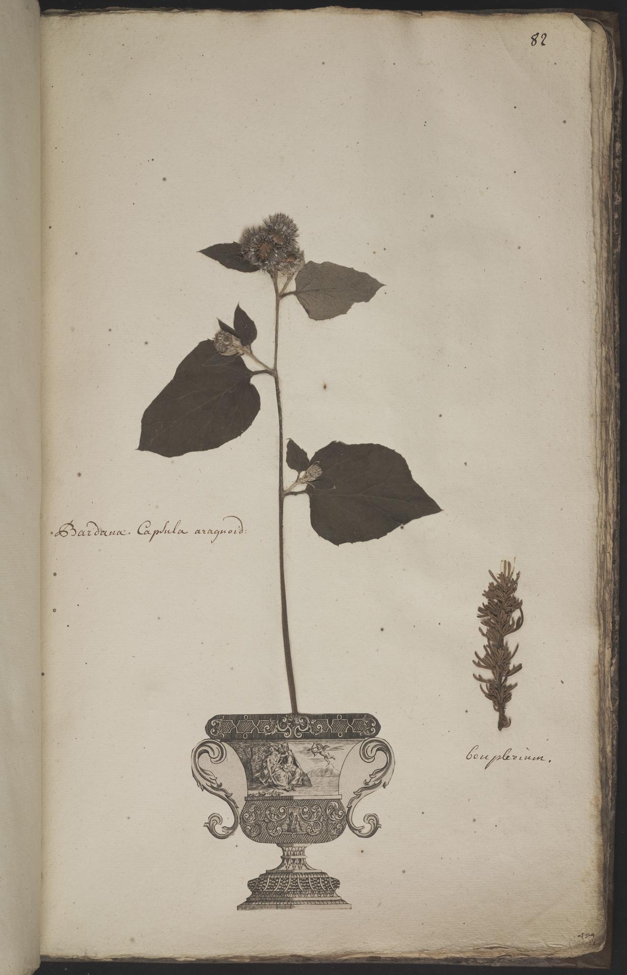 L.3960955 | Artemisia L.