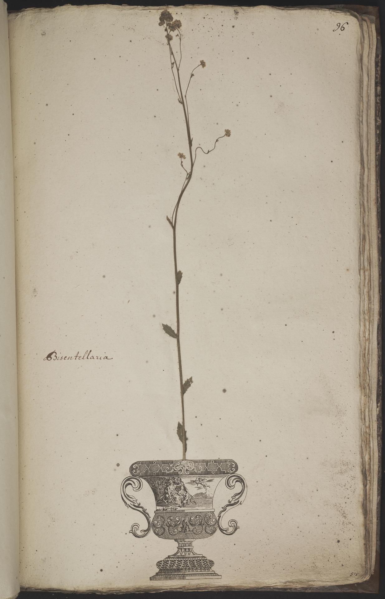 L.3960974 | Biscutella didyma L.