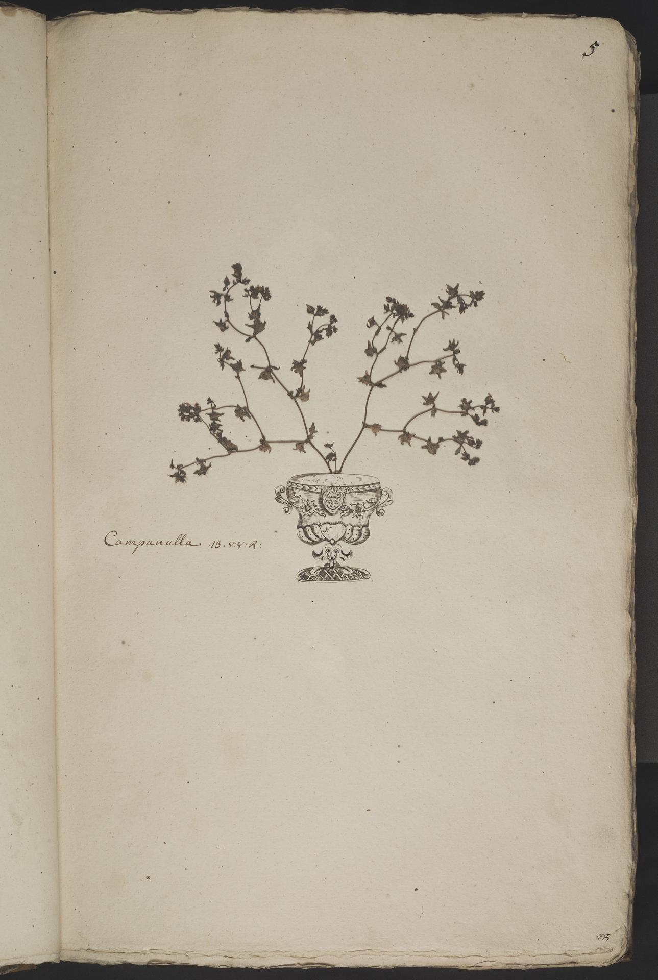 L.3960993 | Campanula erinus L.