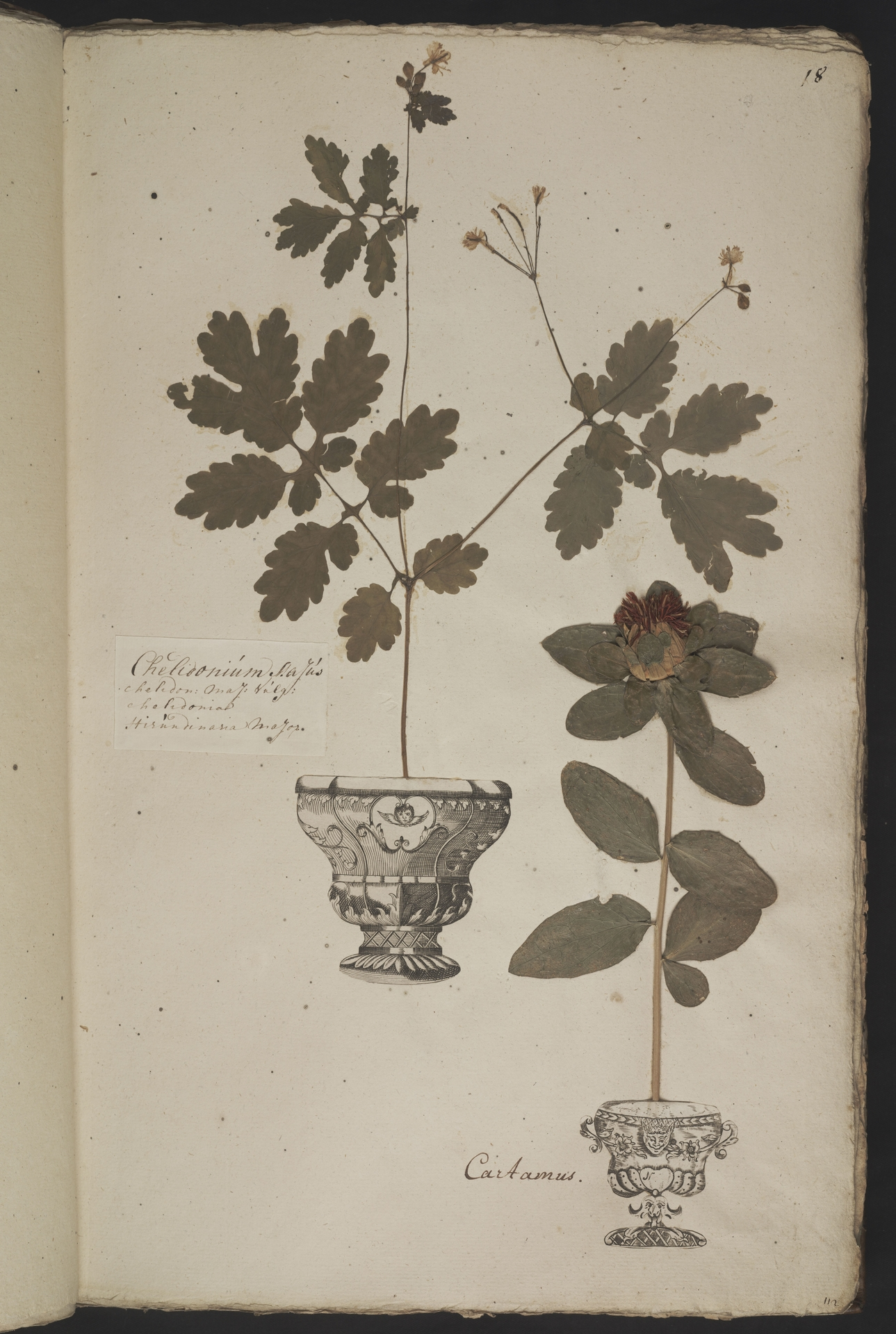 L.3961009 | Chelidonium majus L.