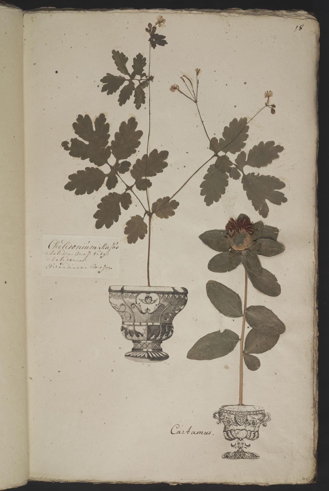 L.3961010 | Carthamus tinctorius L.