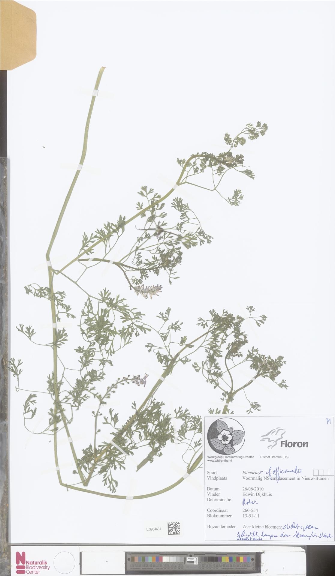 L.3964637 | Fumaria officinalis L.